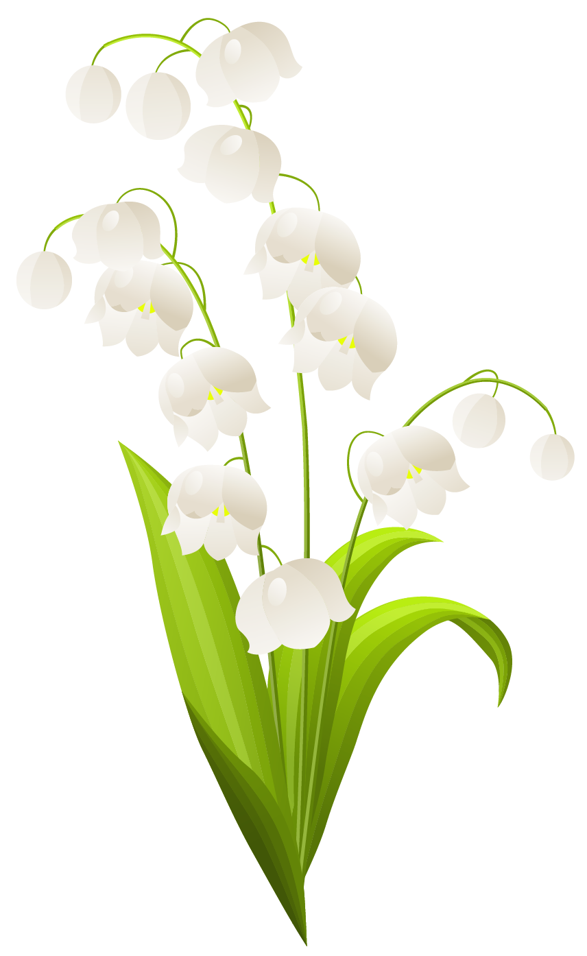 Easter lily clip art. Path clipart valley