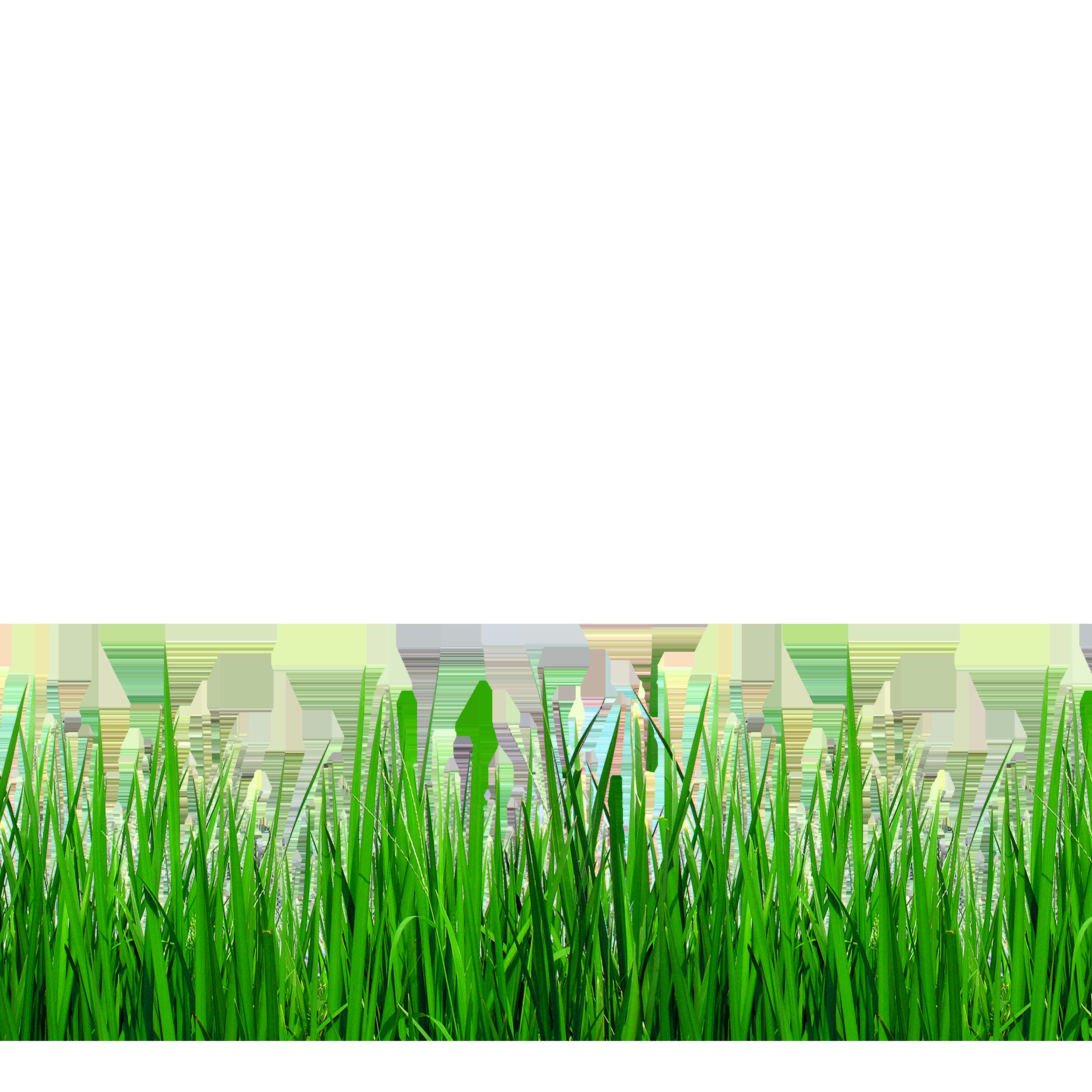 Grass border png. Download grasses clip art