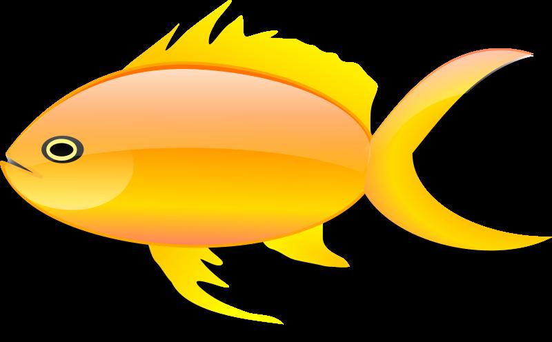 Panda free images goldfishclipart. Fish clipart goldfish