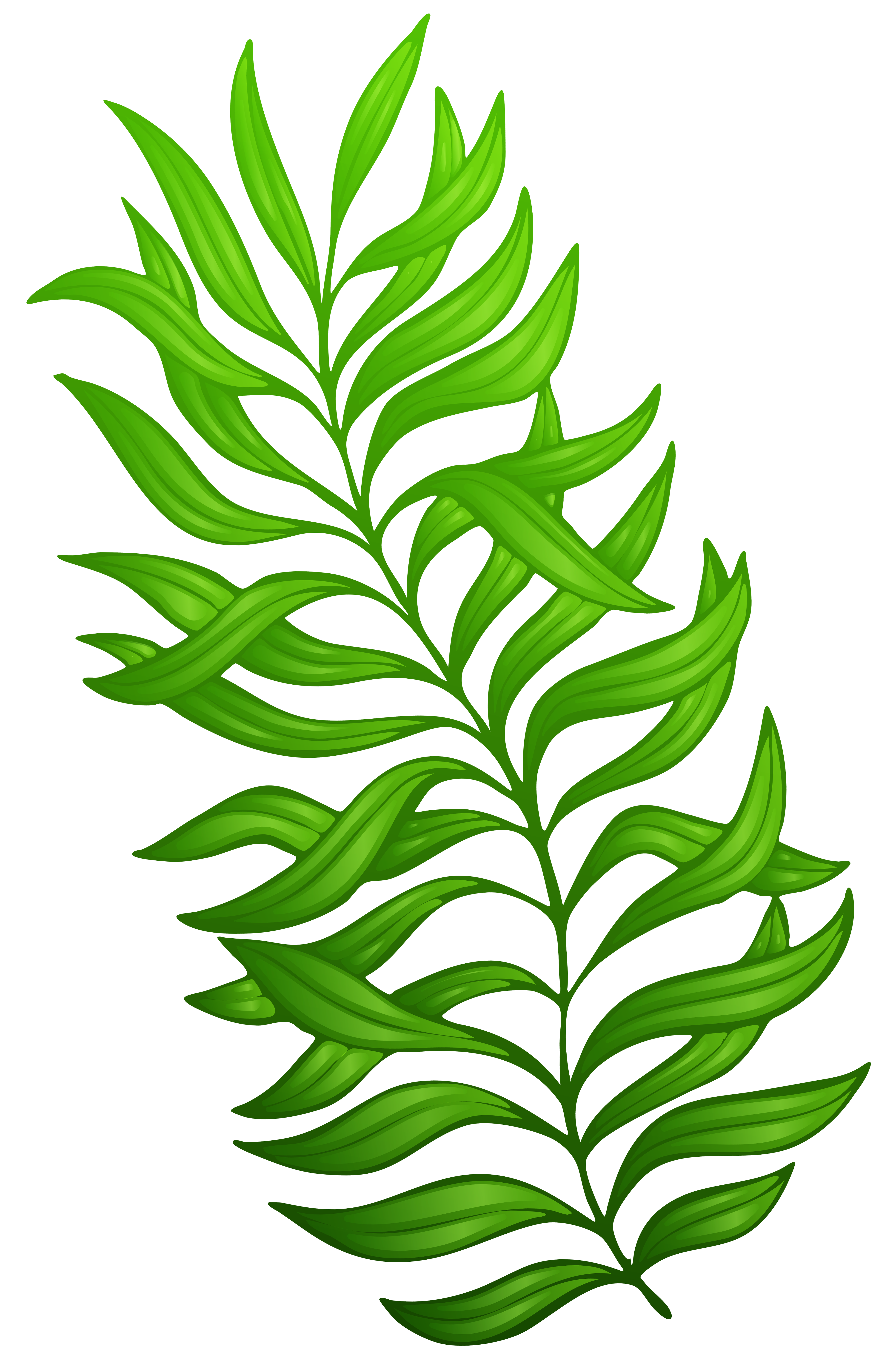Moana clipart tropical plant. Exotic green png image