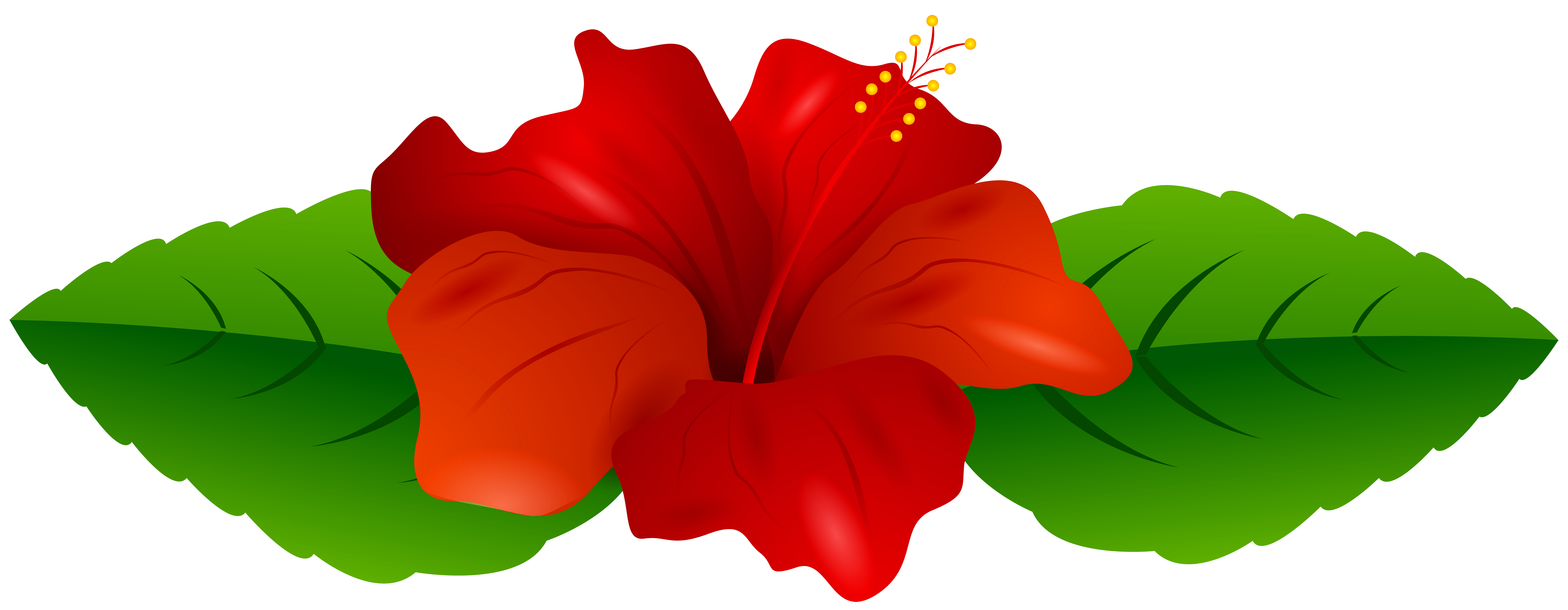 Hibiscus clipart real. Red transparent png clip