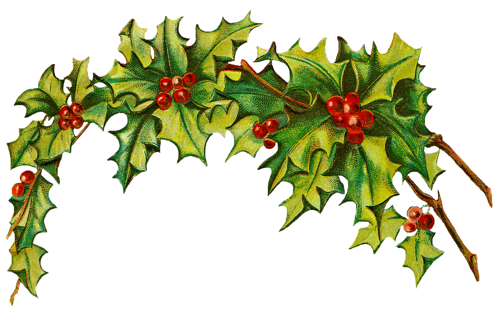 Christmas holly border png.  collection of clipart
