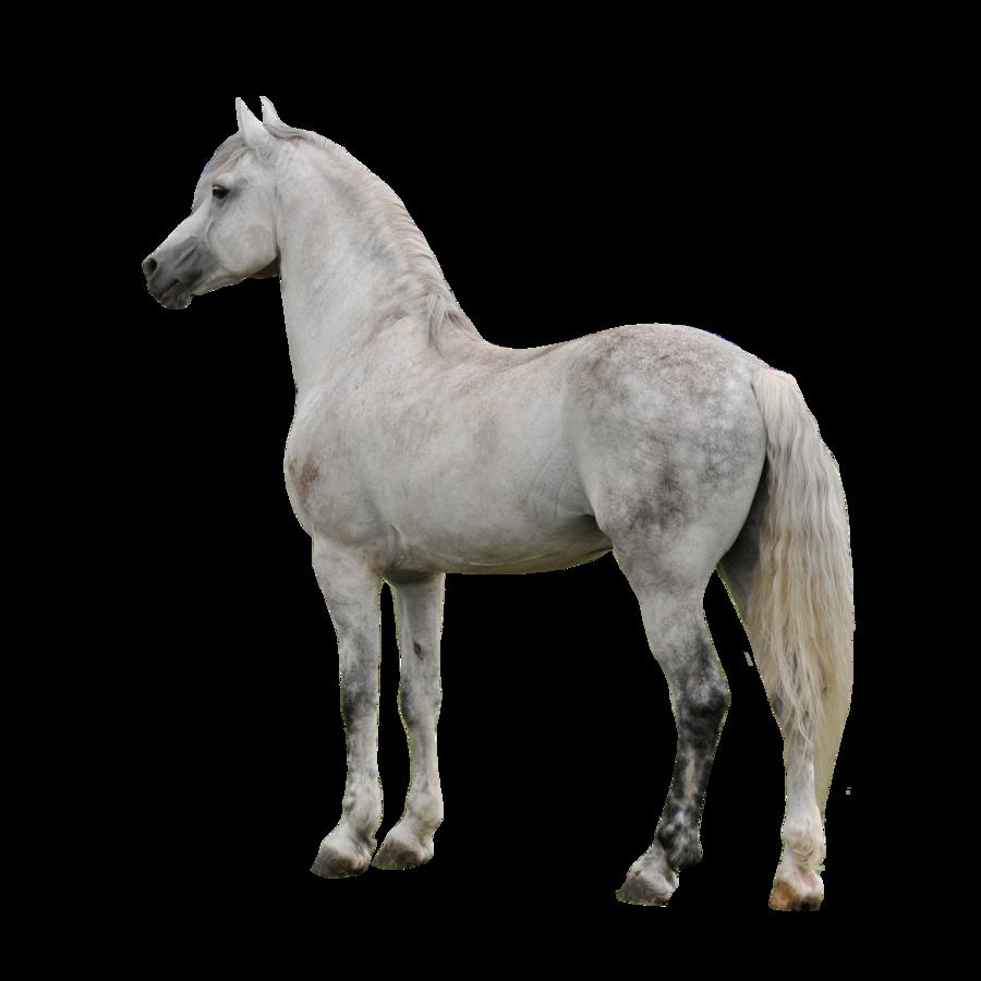 Horses clipart dog. Horse png mart