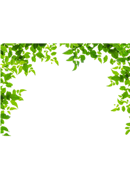 Borders and frames leaf. Square clipart green square