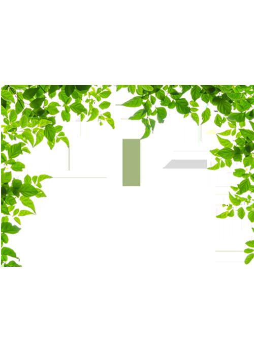Ivy border png. Borders and frames leaf