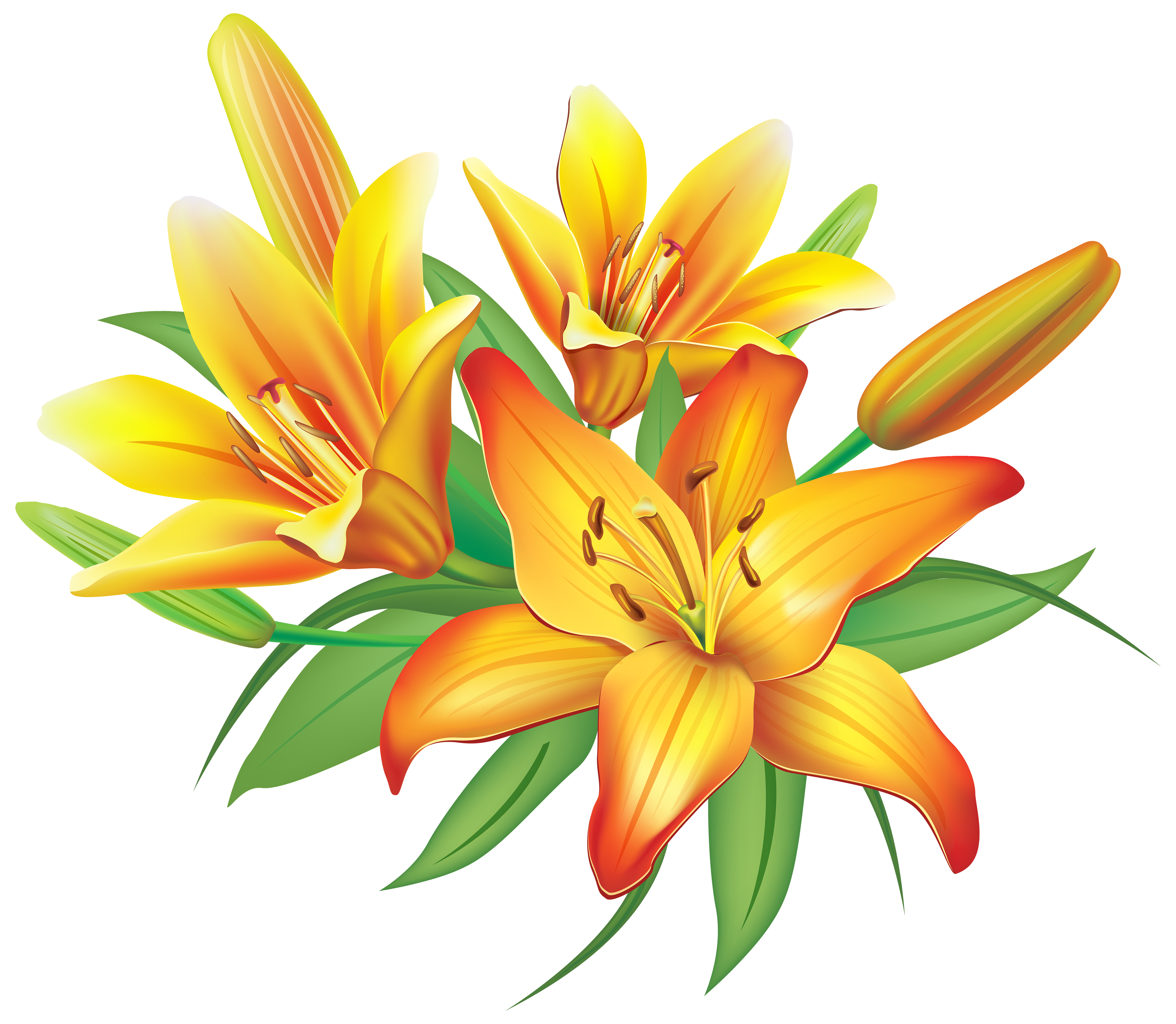 Yellow lilies flowers decoration. Hand clipart flower