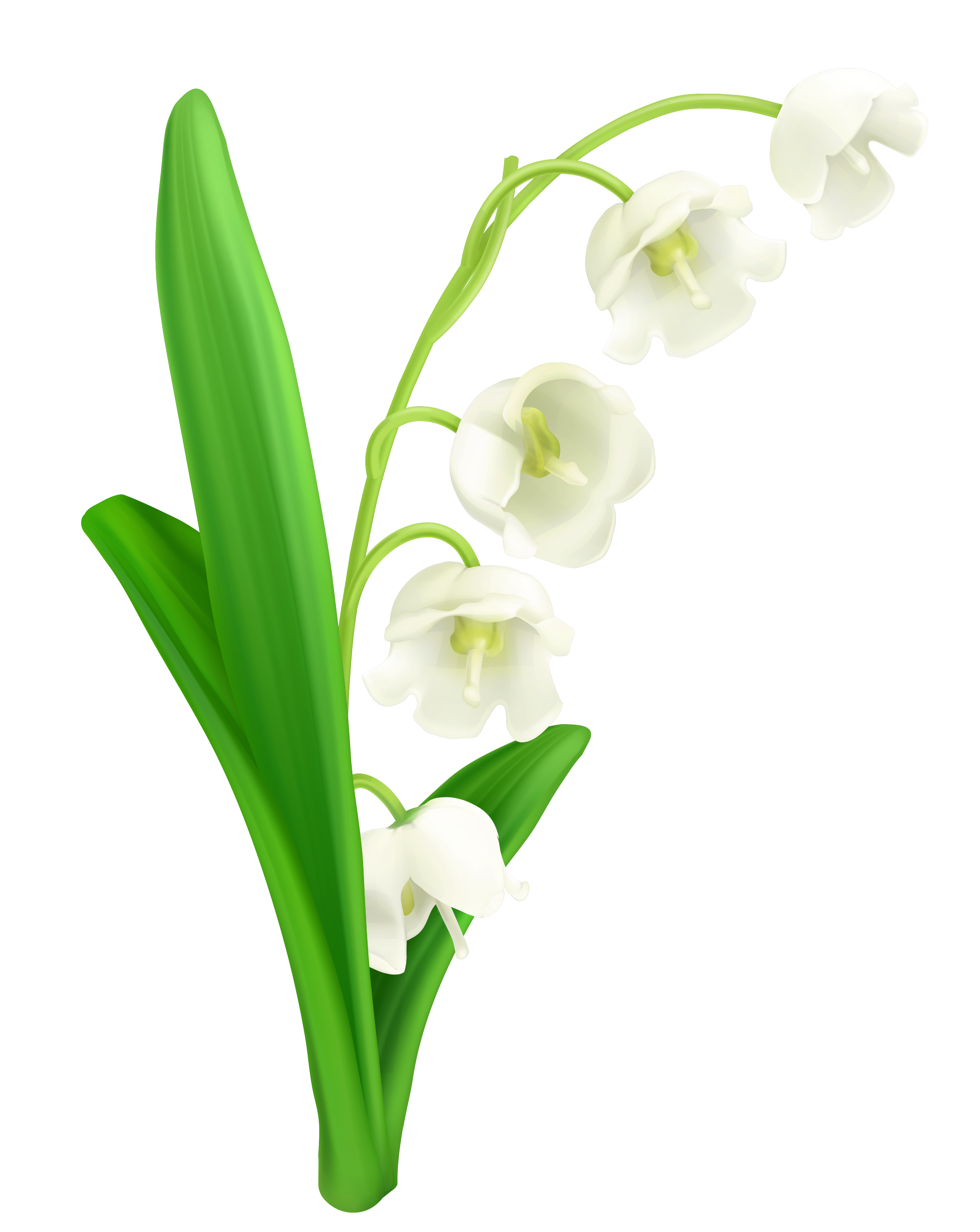 Path clipart valley. Lily of the png