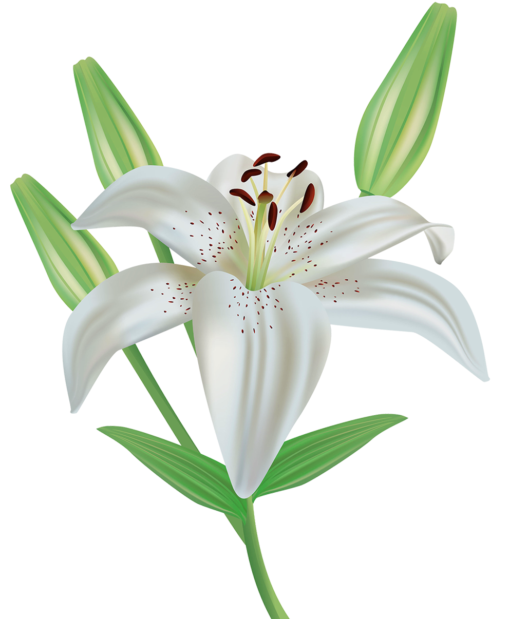 Clipart image gallery yopriceville. Lily flower png
