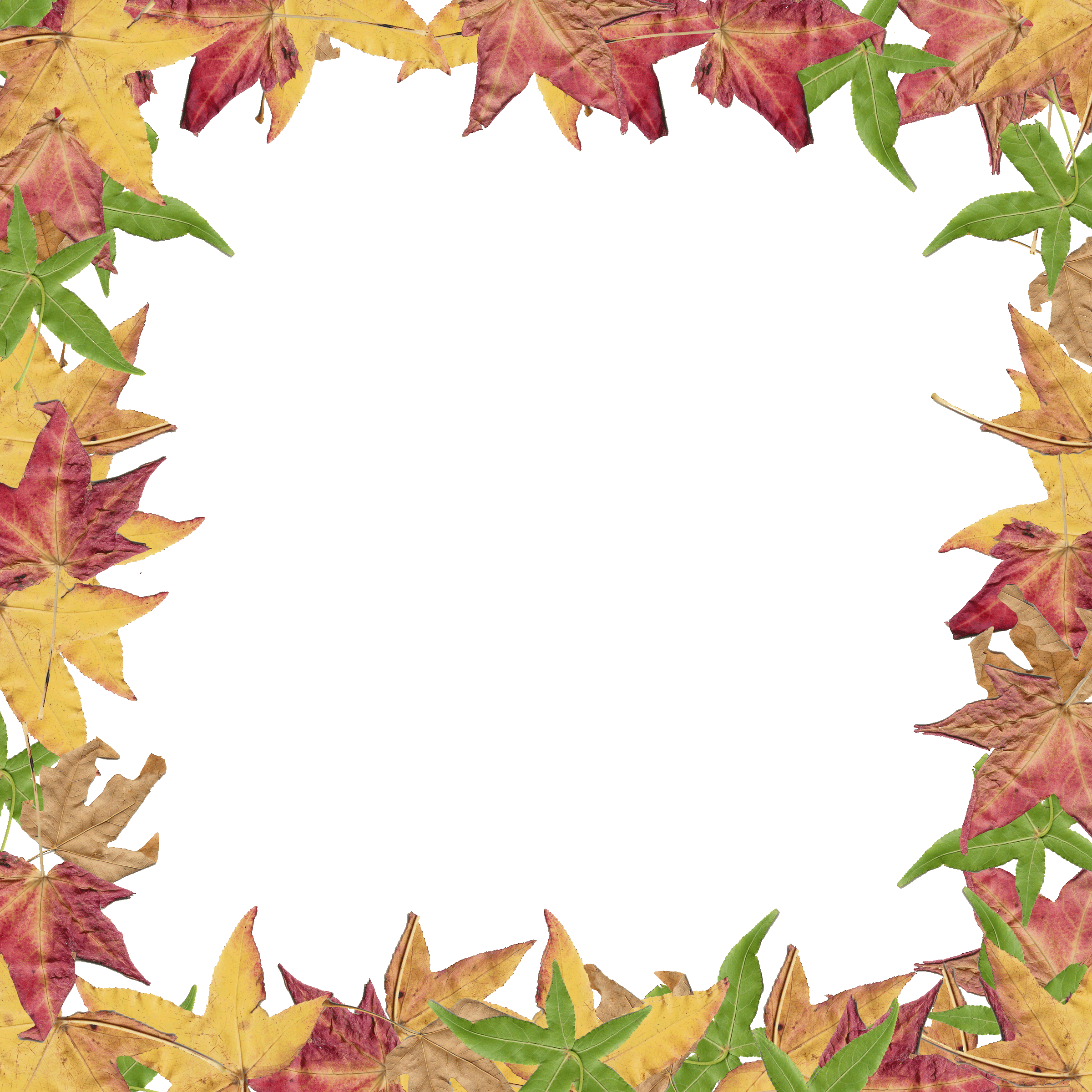 Colors clipart autumn. Fall leaves border panda