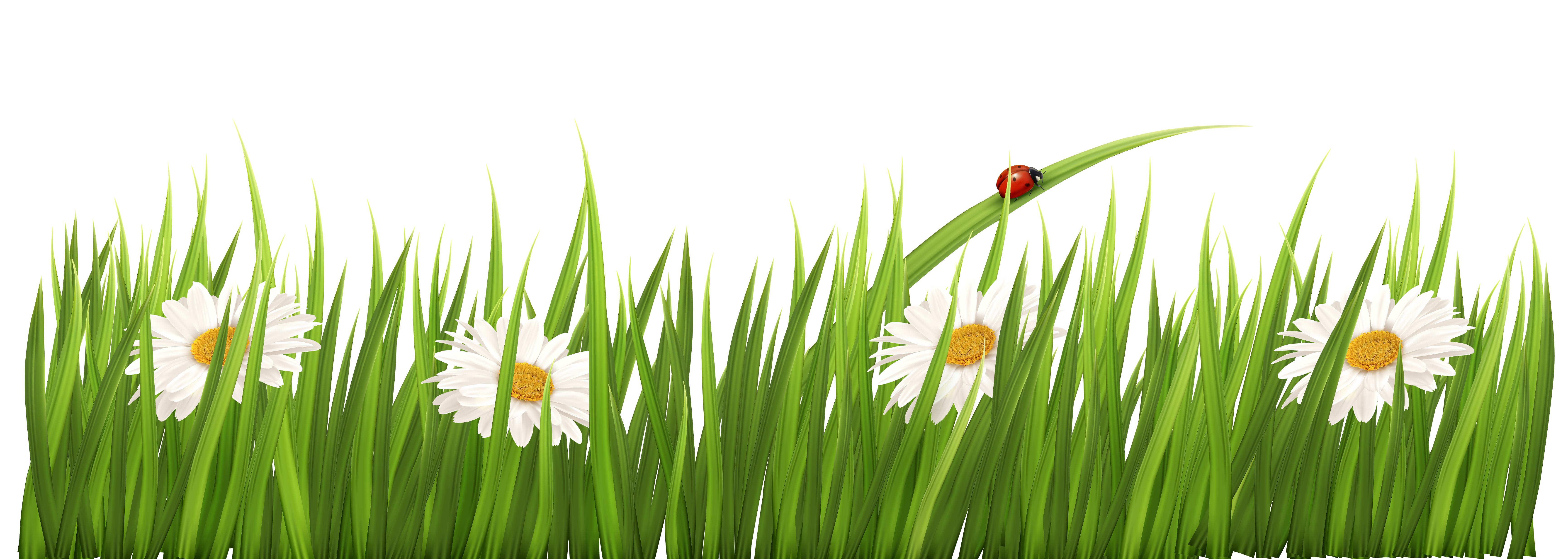 Free flower transparent background. Pencil clipart boarder