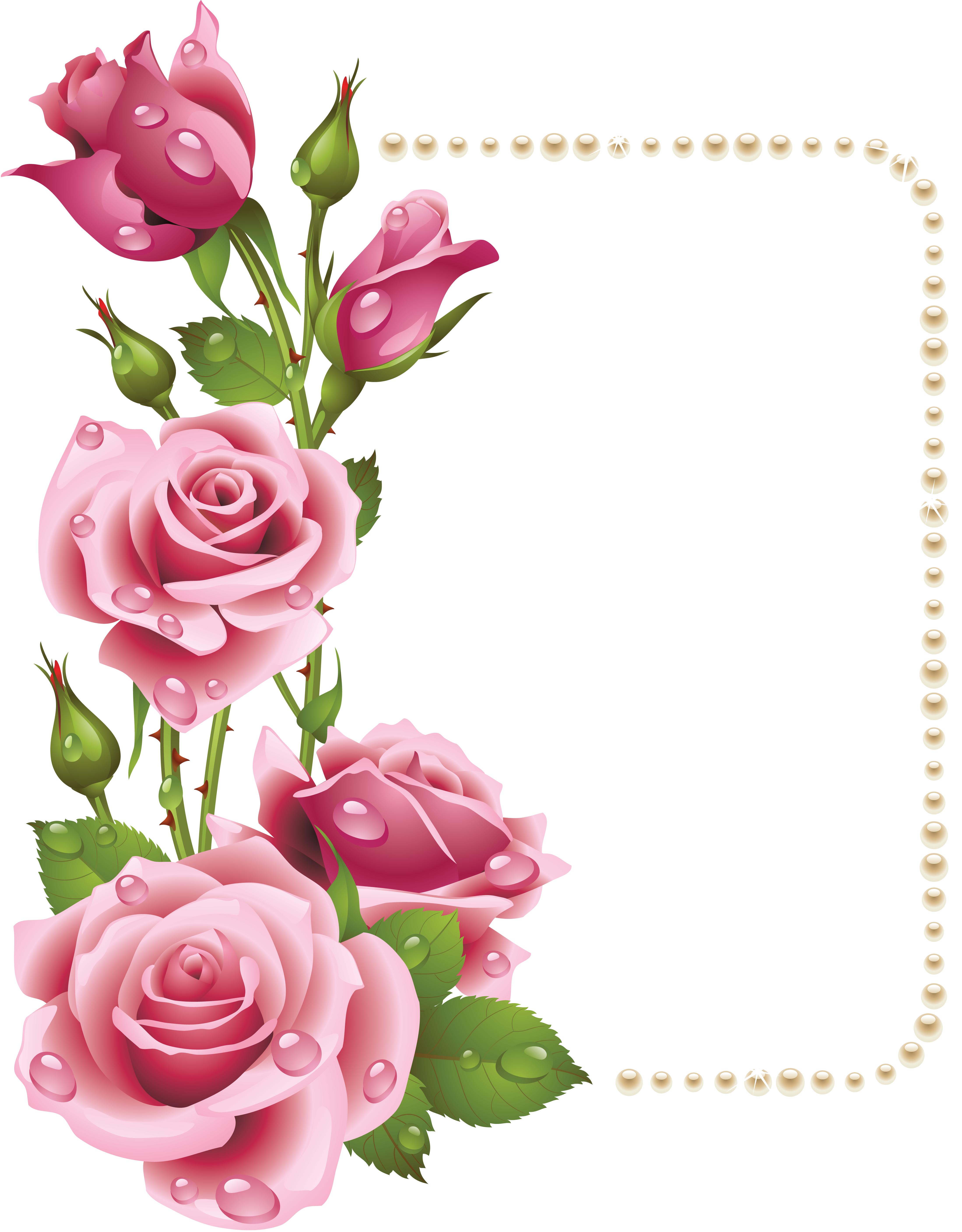 Large transparent frame with. Clipart rose pearl