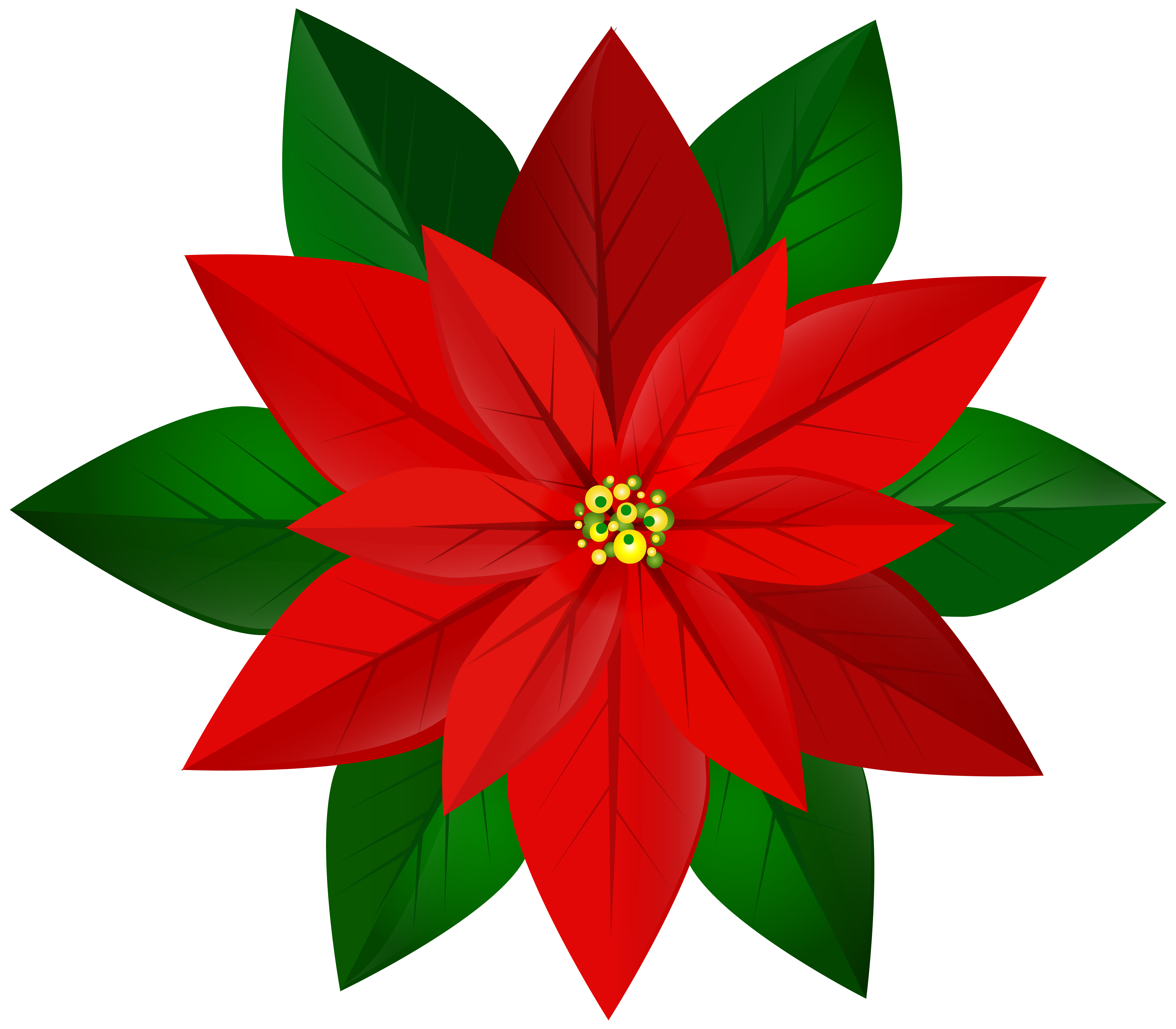 Poinsettias clipart yuletide. Christmas red poinsettia png