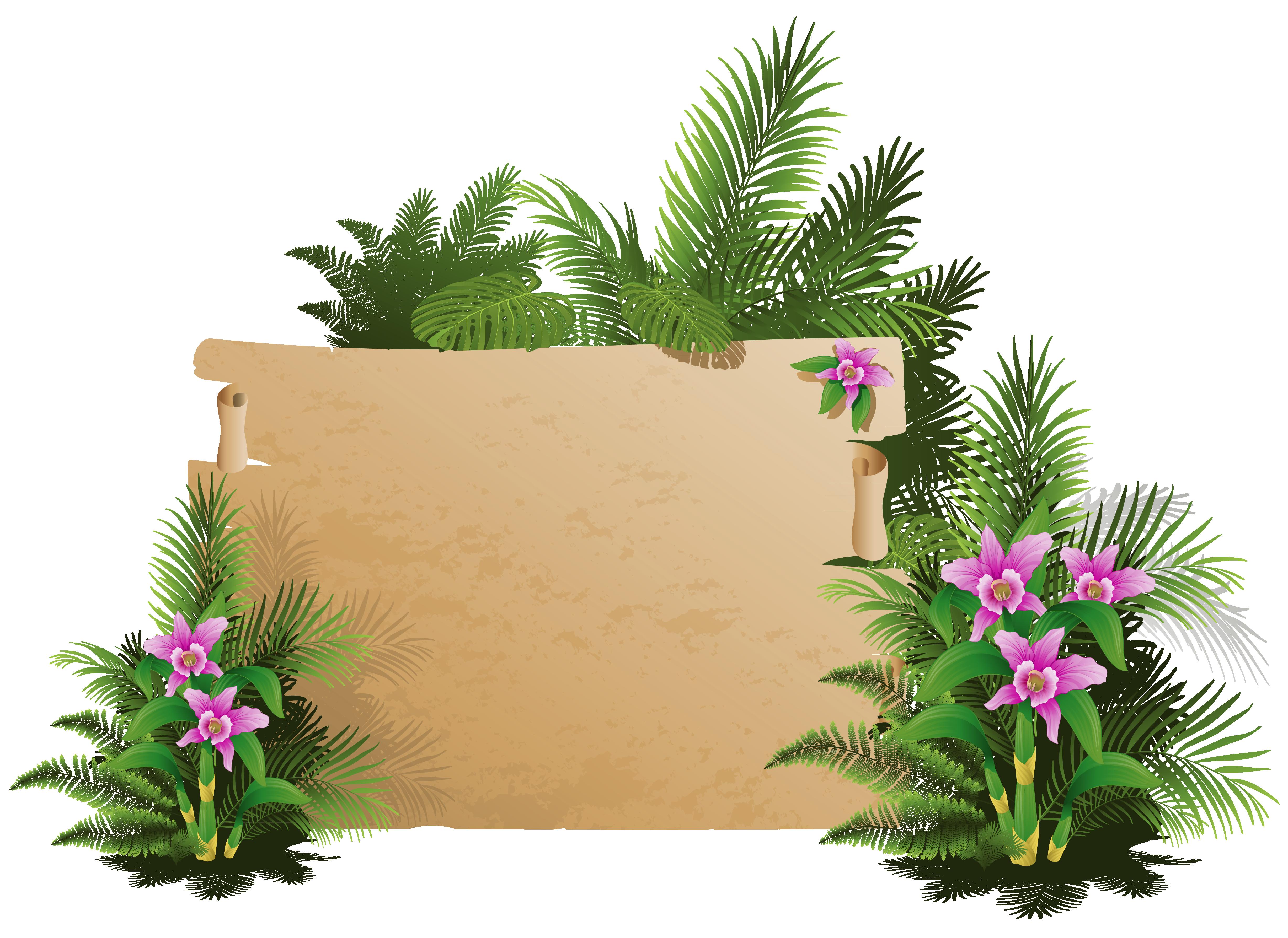 Summer exotic board png. Tree clipart gumamela