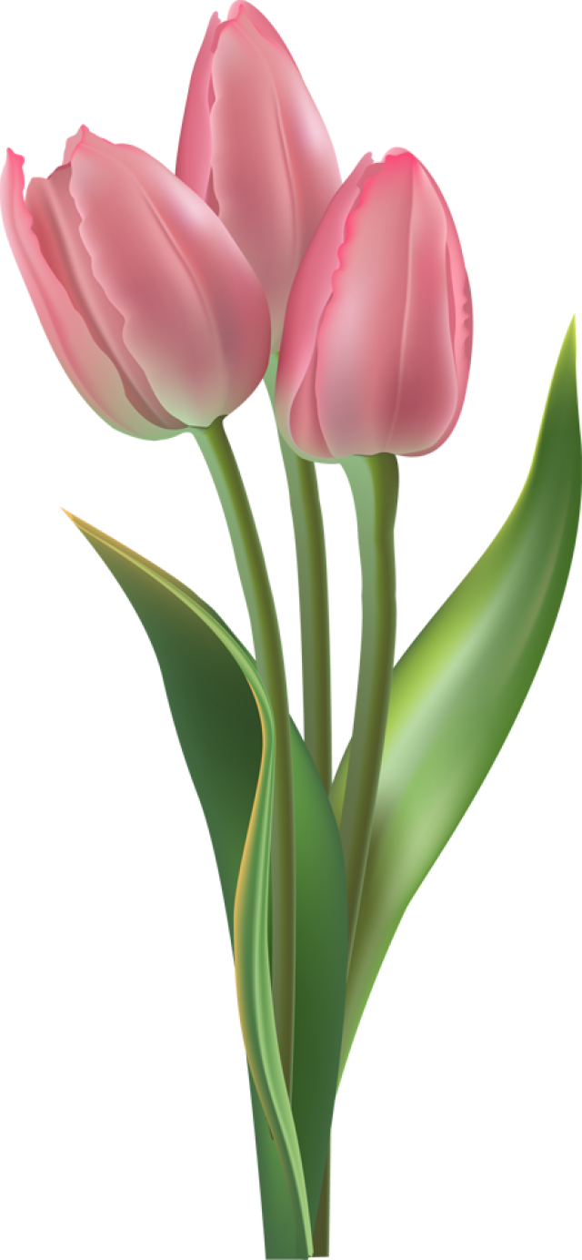 Flowers clipart tulip. Web design development pinterest