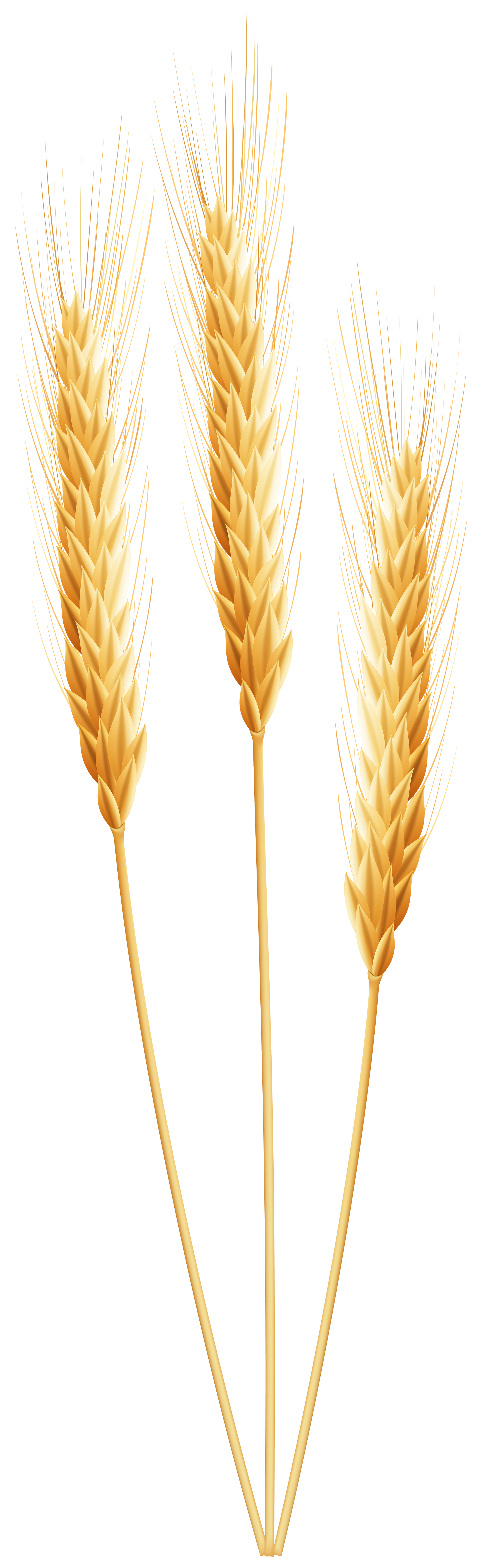 Clipart tree wheat. Png clip art image