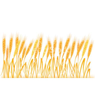 Wheat clipart border. Free cliparts download clip