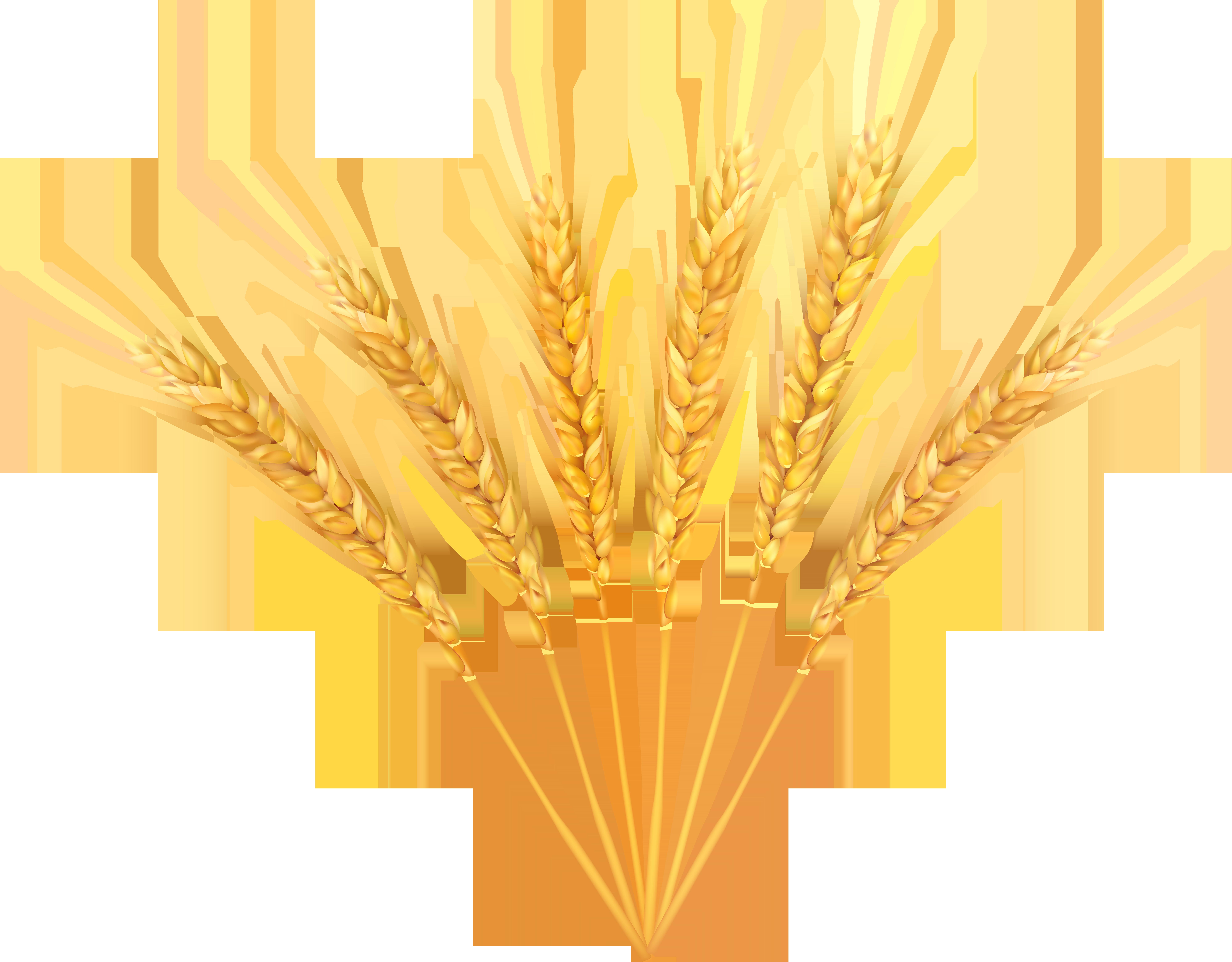 Grains clipart wheat wreath. Decoration png clip art