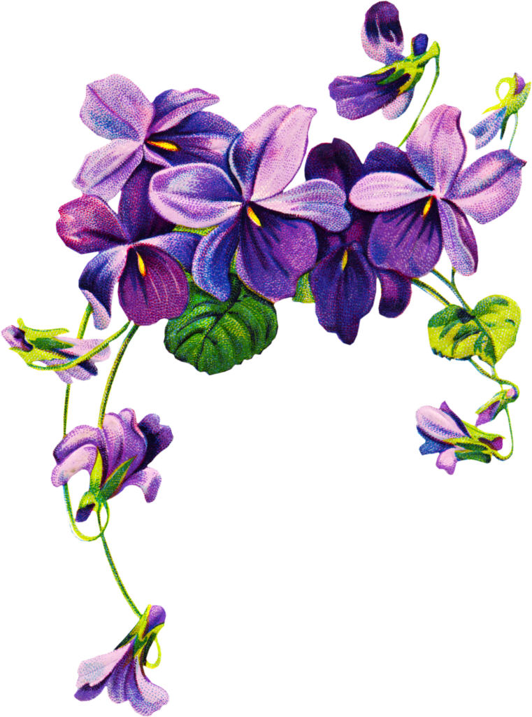 African violets border clip. Poetry clipart bloom