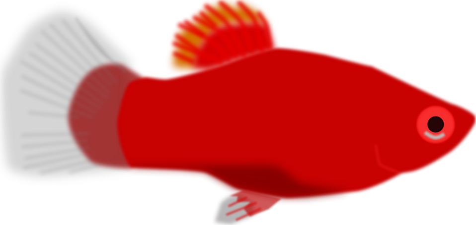 Fish free stock photo. Seafood clipart animated