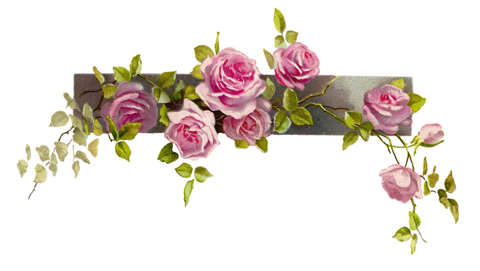 Clipart roses borders. Flower border vintage rose