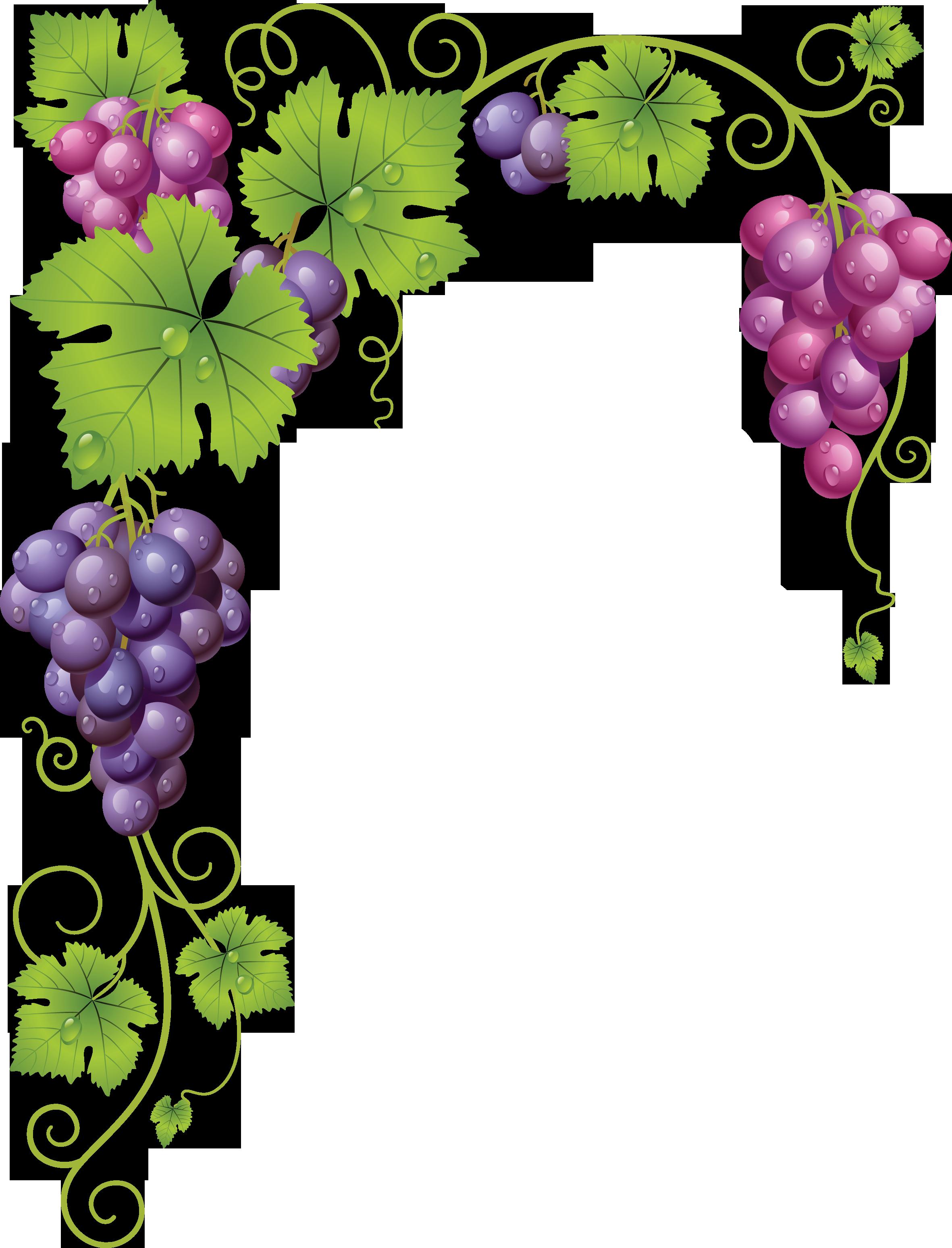 clipart fox grape
