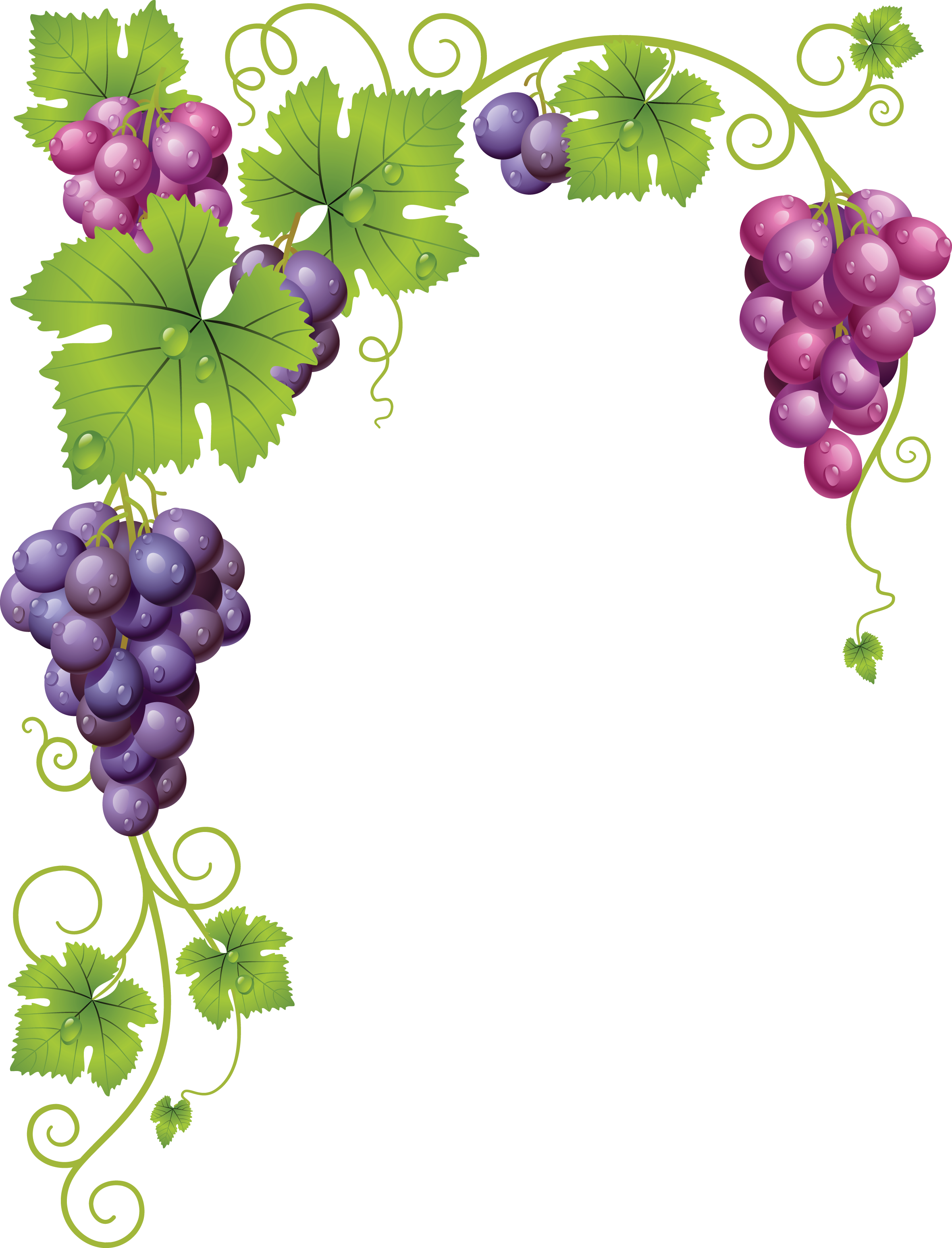 Grape clipart vine clip art.  af c f