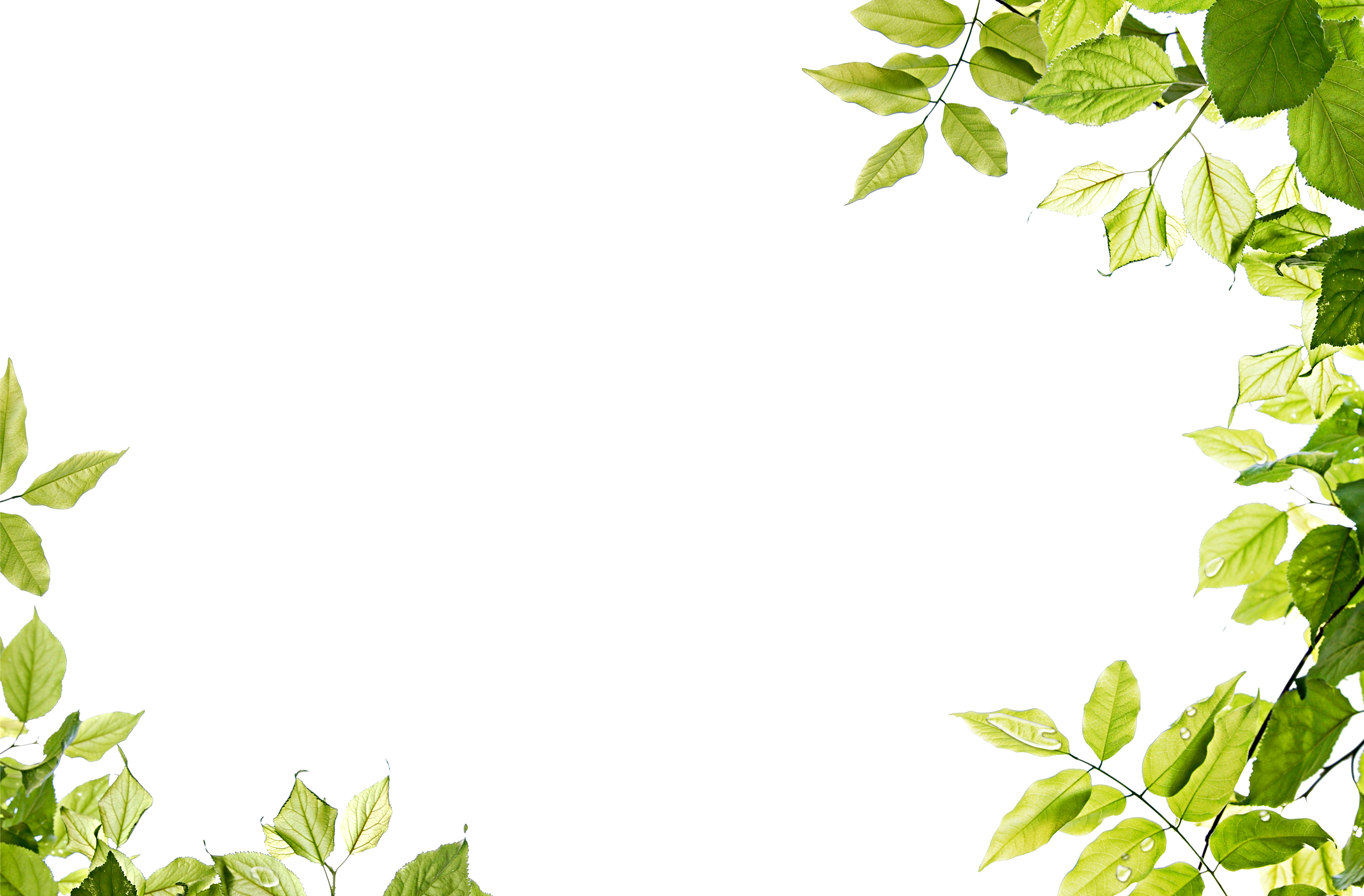 Vine frame png. Free download leaves transparent