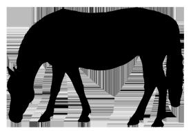 Clipart horse party. Silhouette black grazing clip
