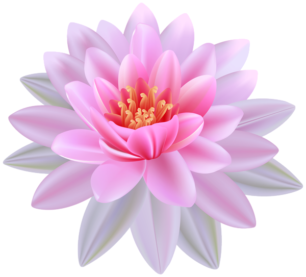 Pink png image stickers. Purple clipart water lily