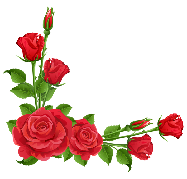 Clipart roses rose gold. Red transparent png boarders