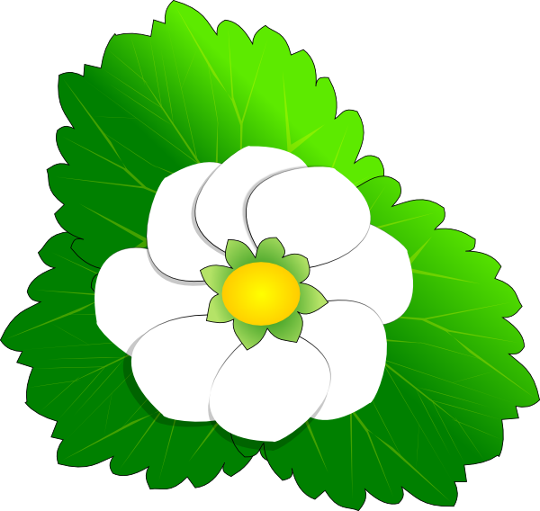 Strawberry flower clip art. Strawberries clipart leaf