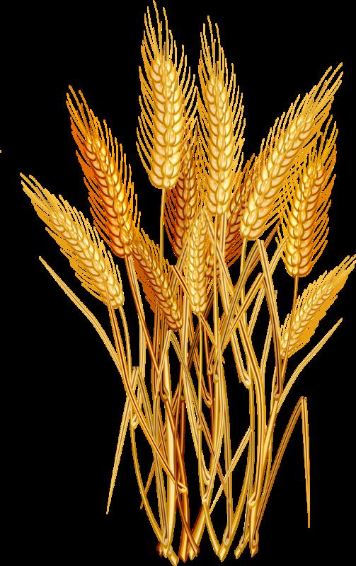 e ad f. Wheat clipart wheat head