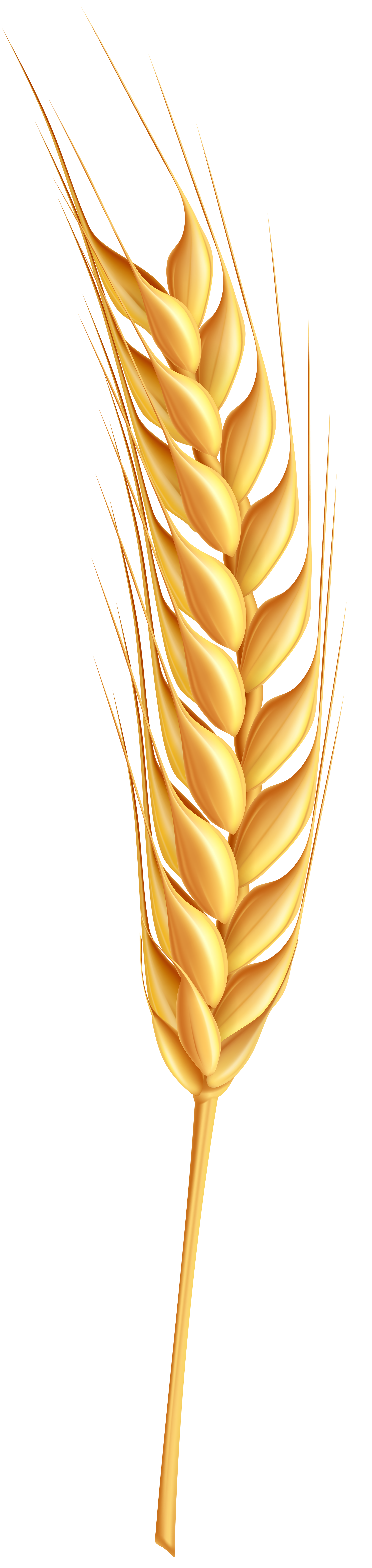 Clipground wheatear png clip. Wheat clipart ear wheat