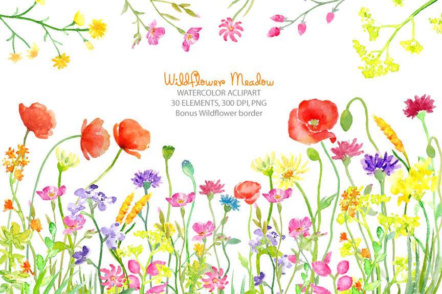 Watercolor meadow wild flower. Clipart borders wildflower