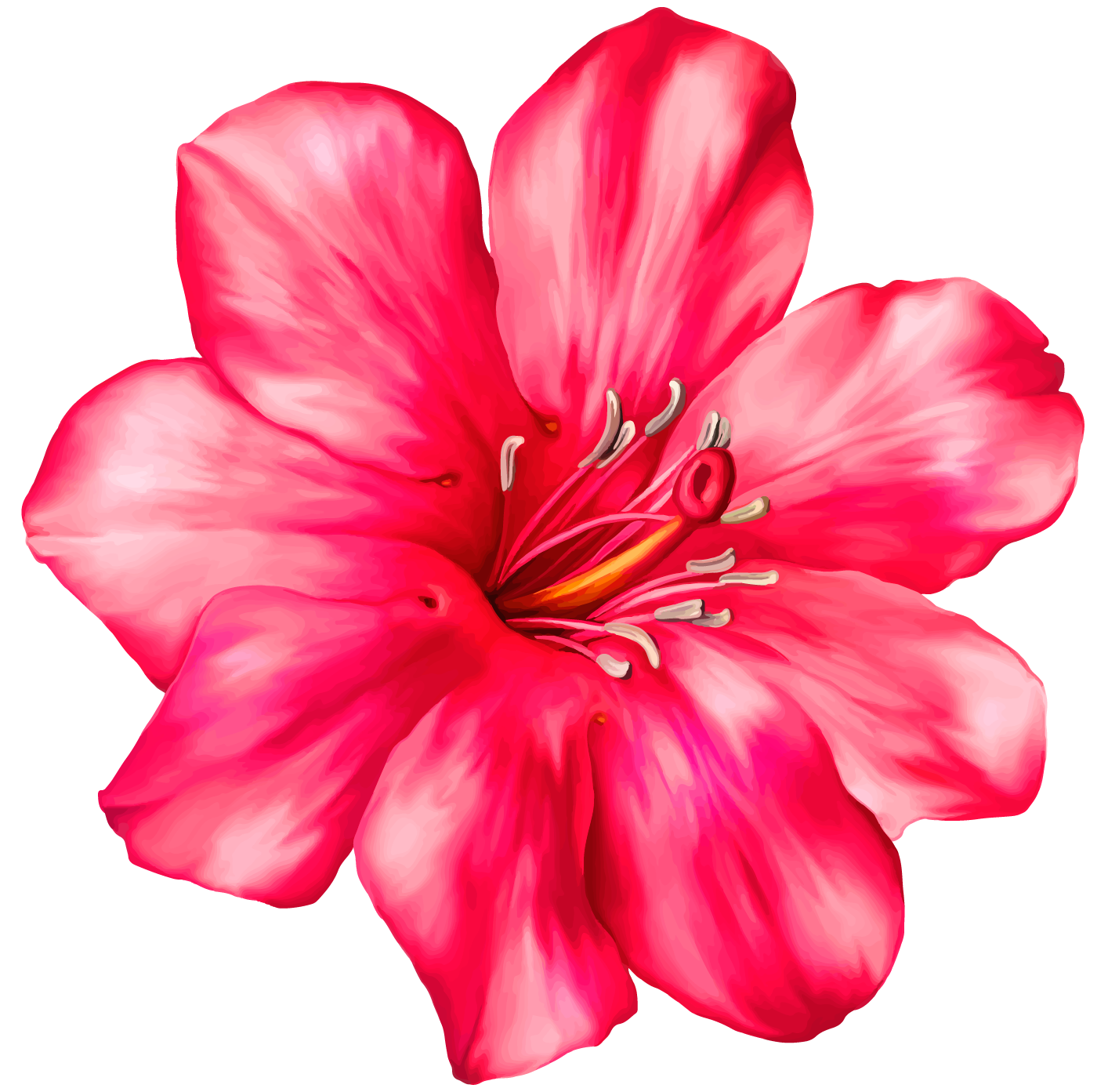 Pink flower png. Exotic clipart picture wallpaper