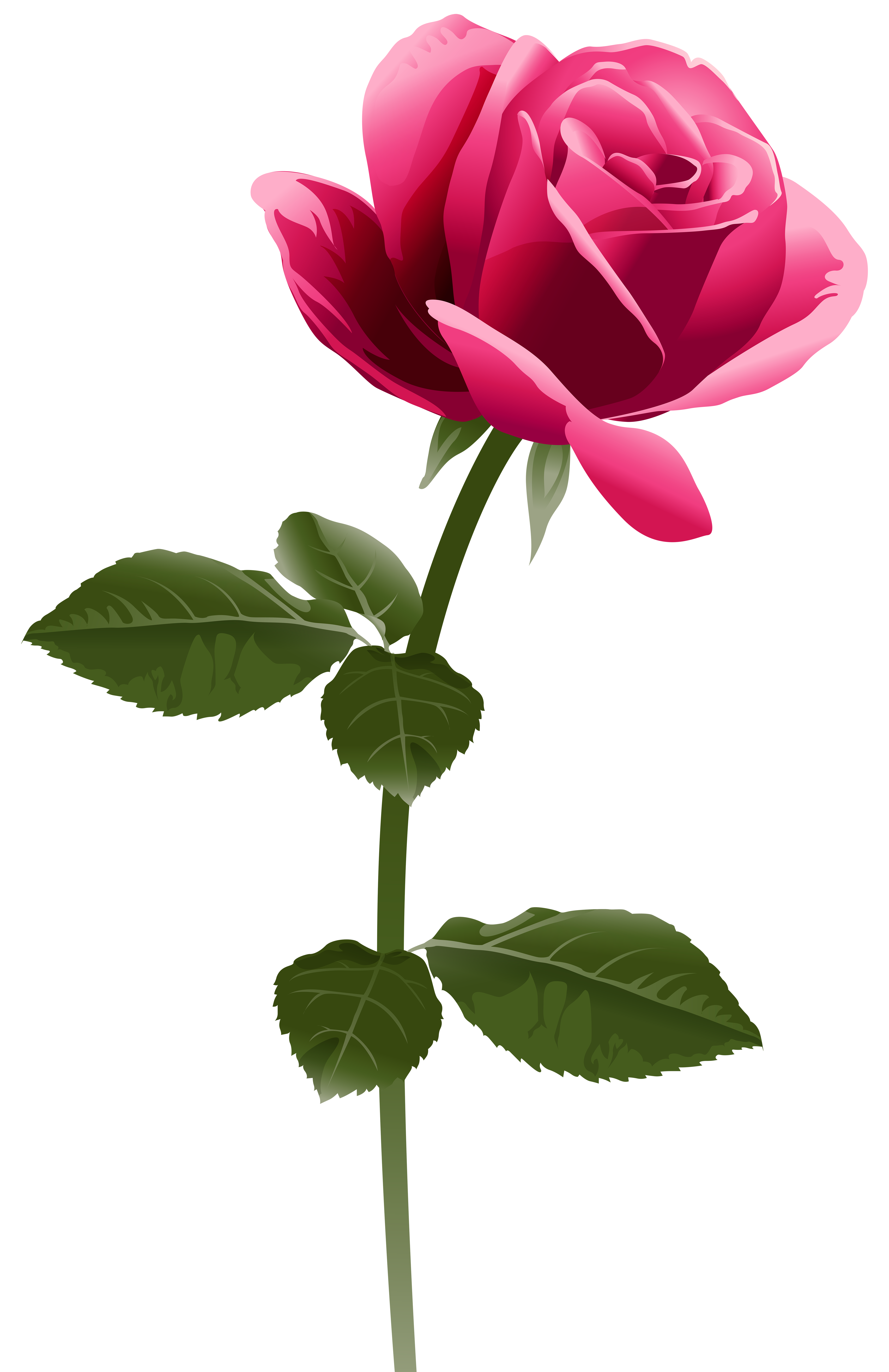 Pink rose png clip. Diamond clipart watercolor