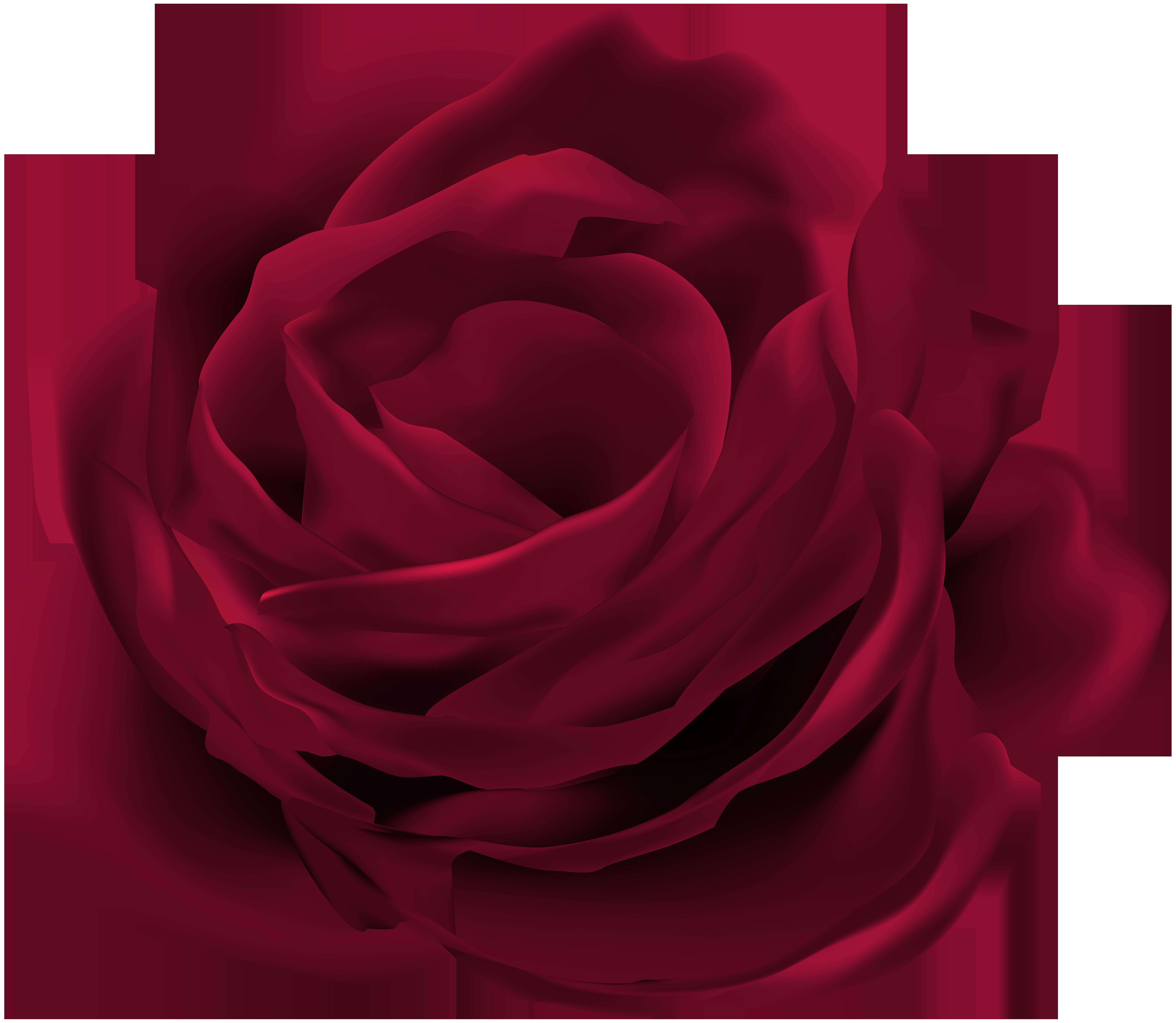 Dark red clip art. Rose flower png