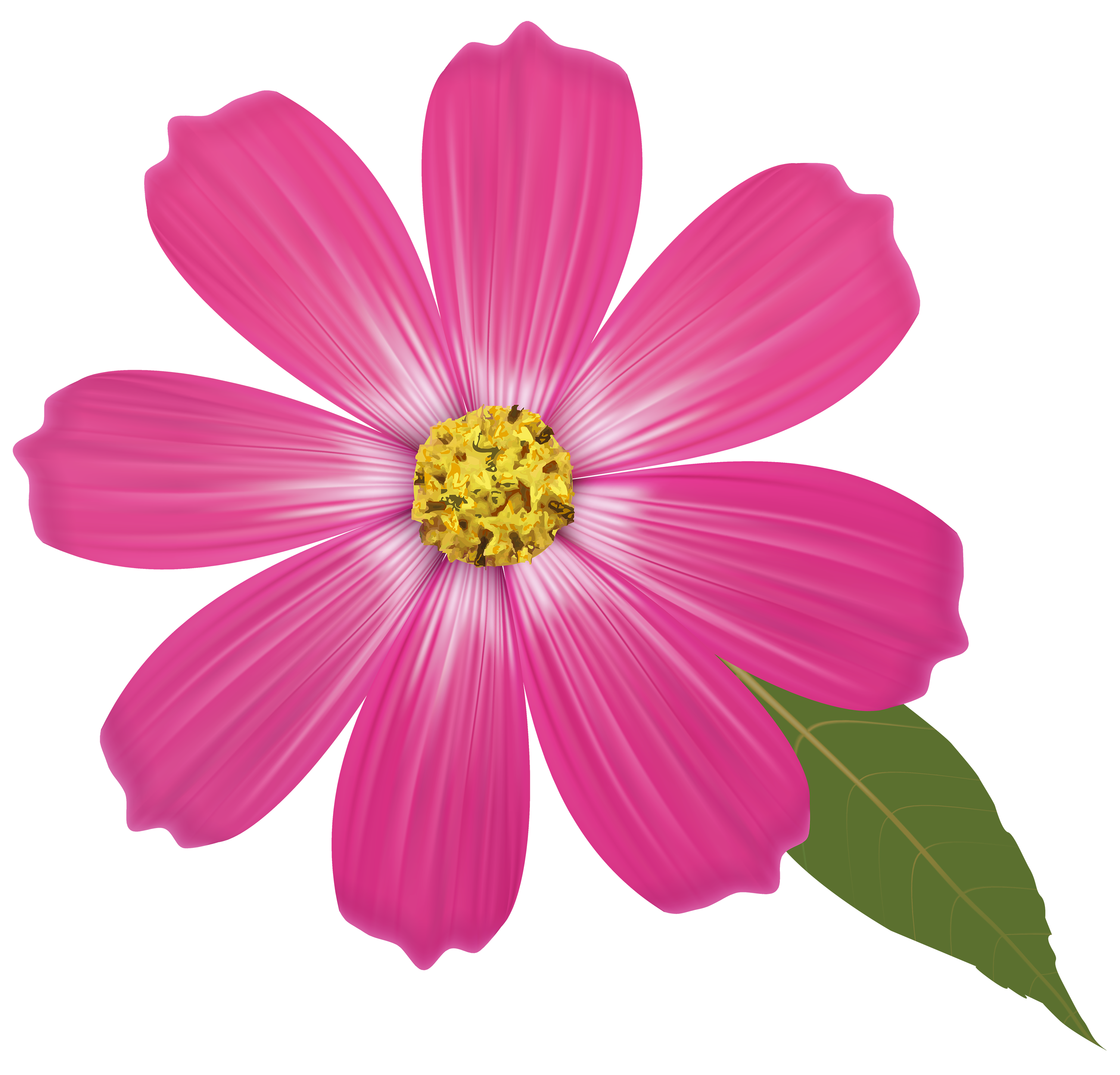 Pink best web. Flower clipart png