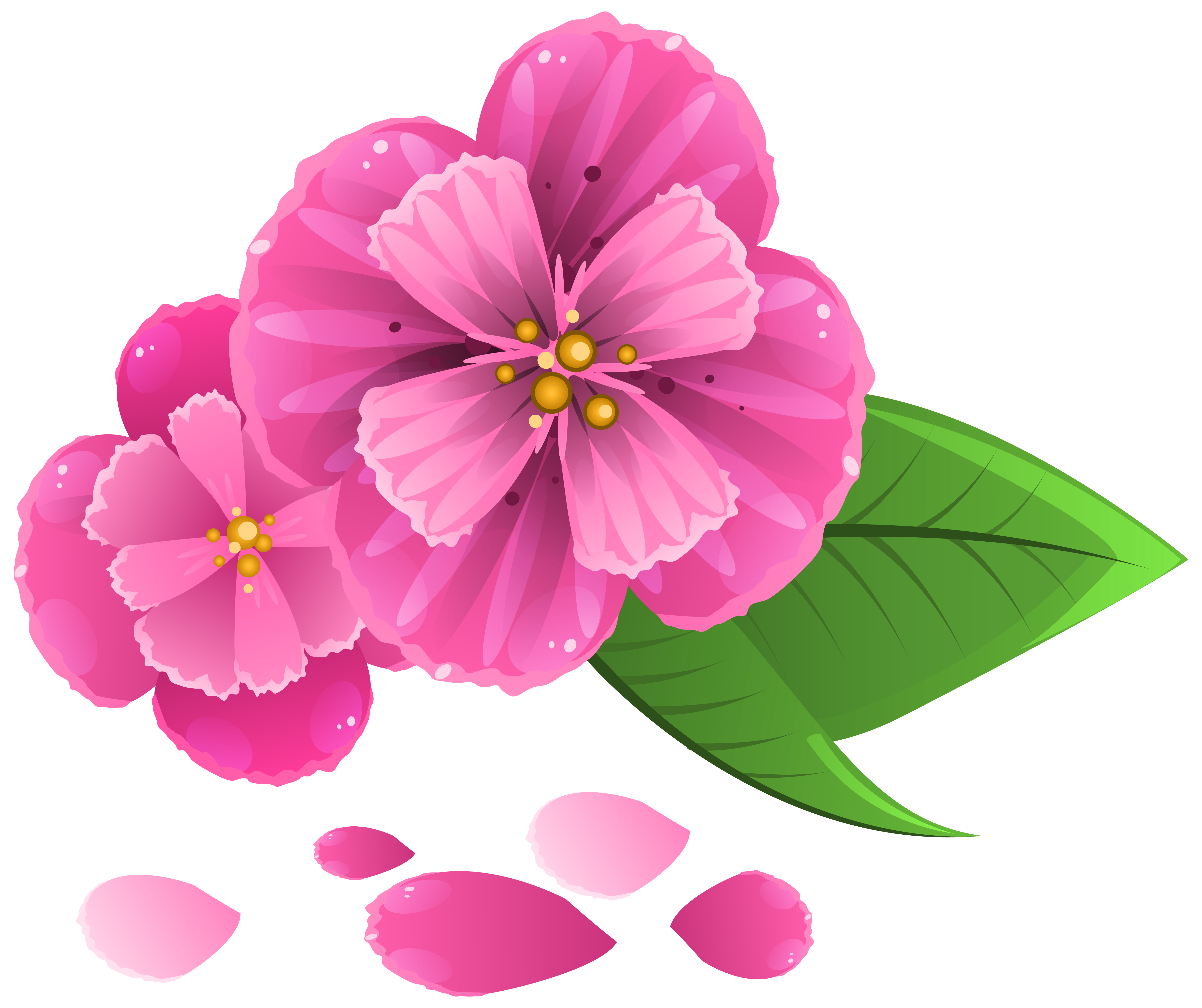 Pink flower png. With petals clipart image