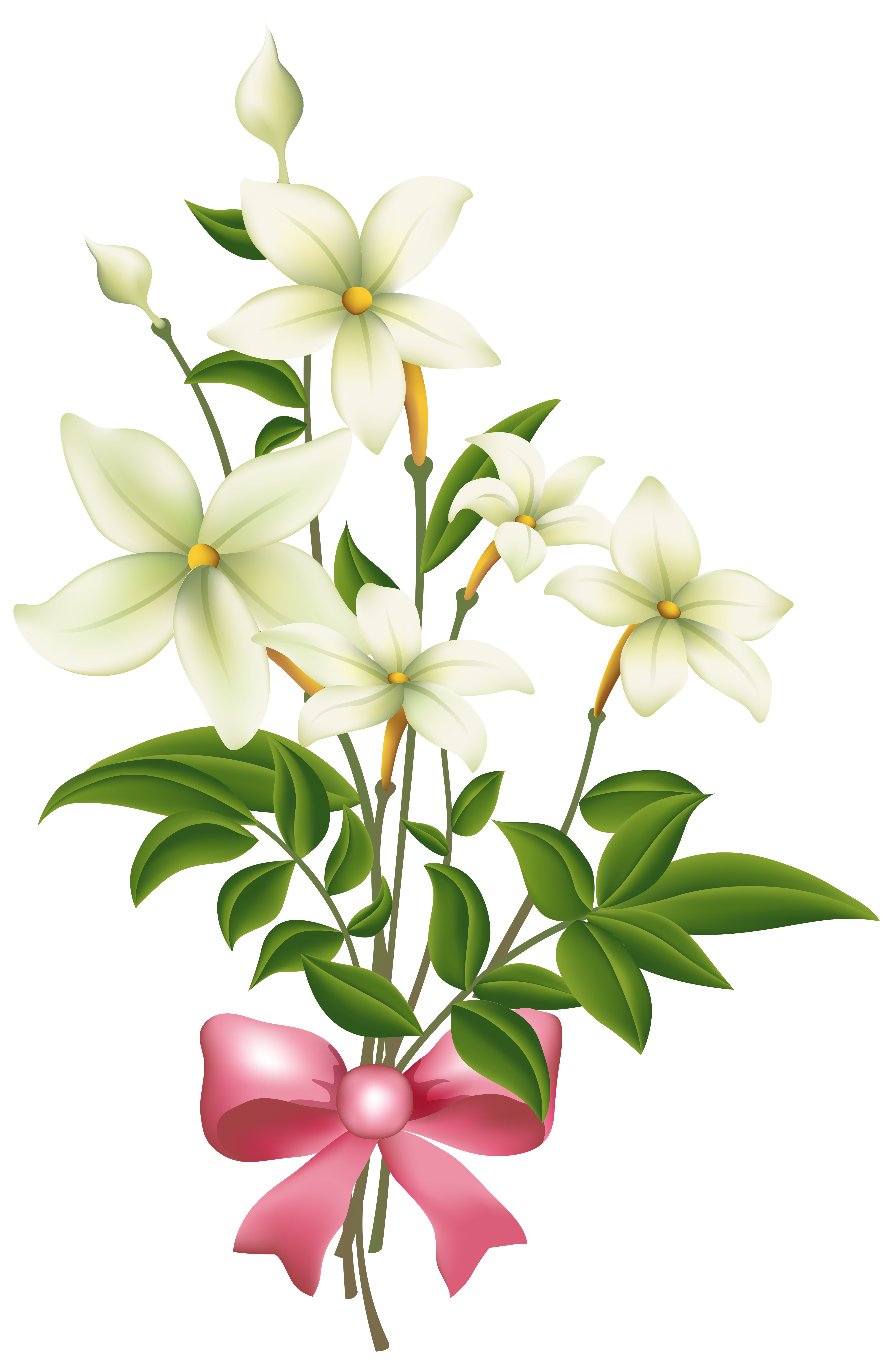 White flowers with pink. Lily clipart blue jasmine