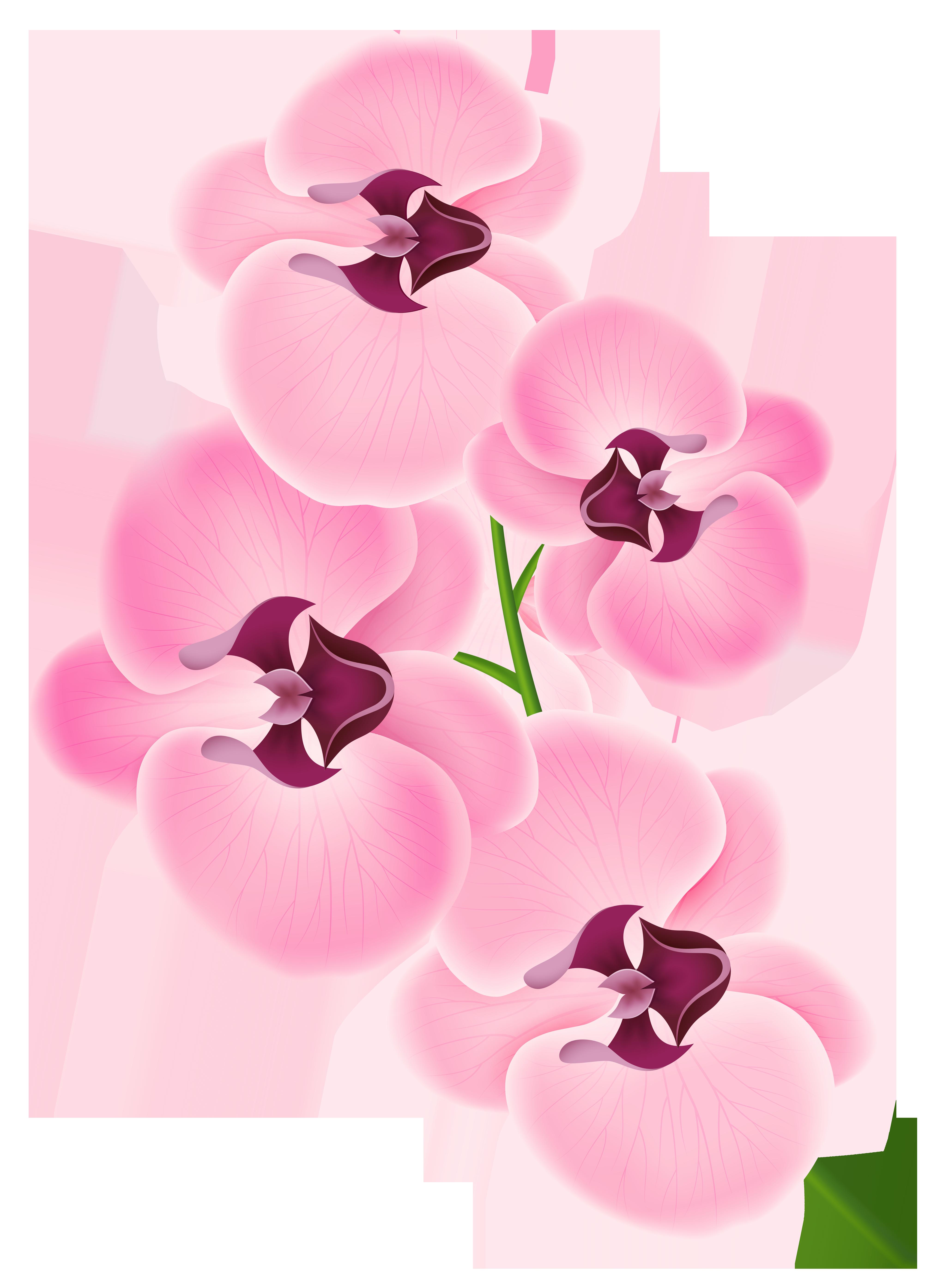 Floral clipart orchid. Png google cuba party