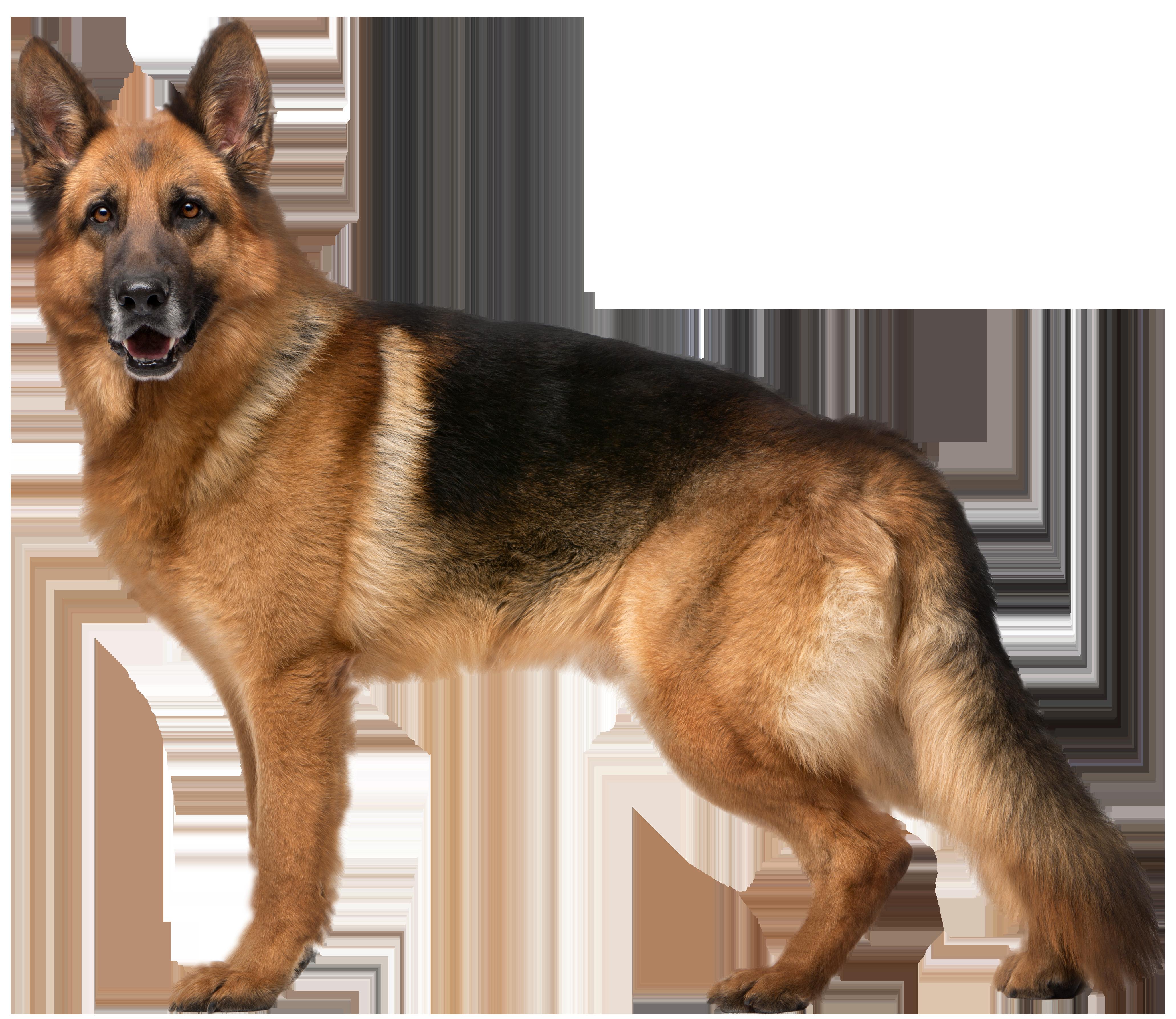 Clocks clipart dog. German shepherd png clip