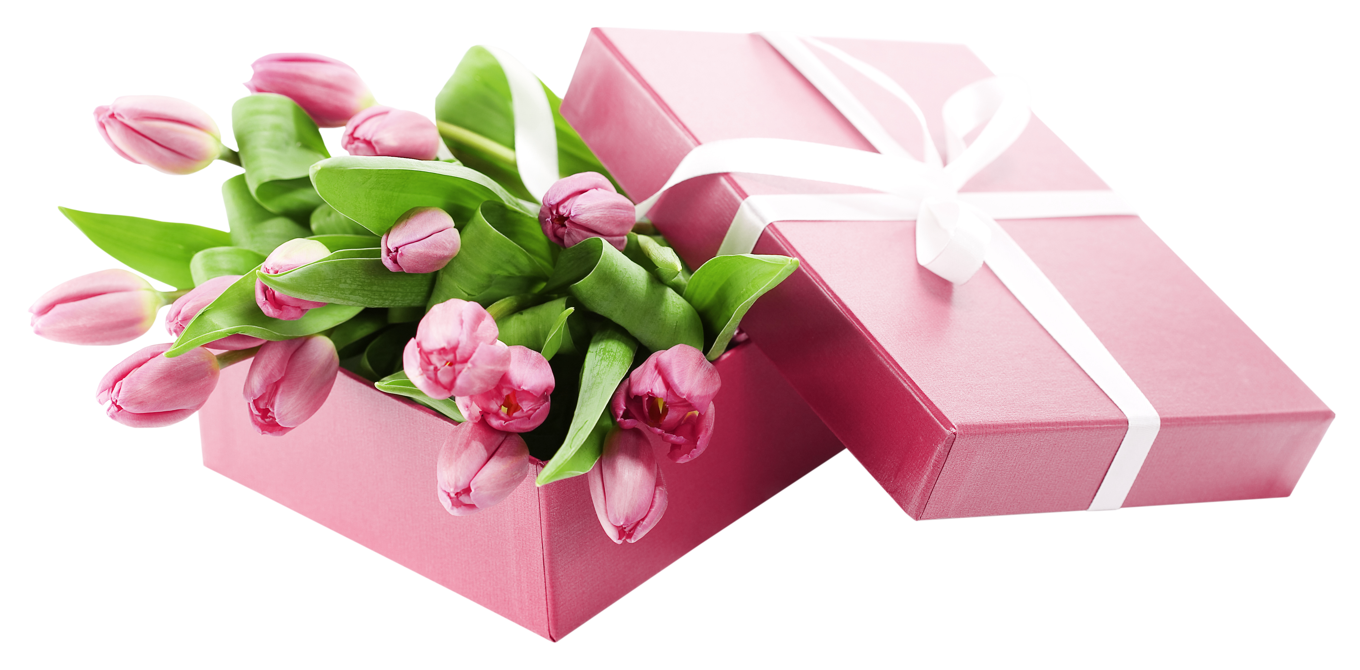 With pink tulips transparent. Flower box png