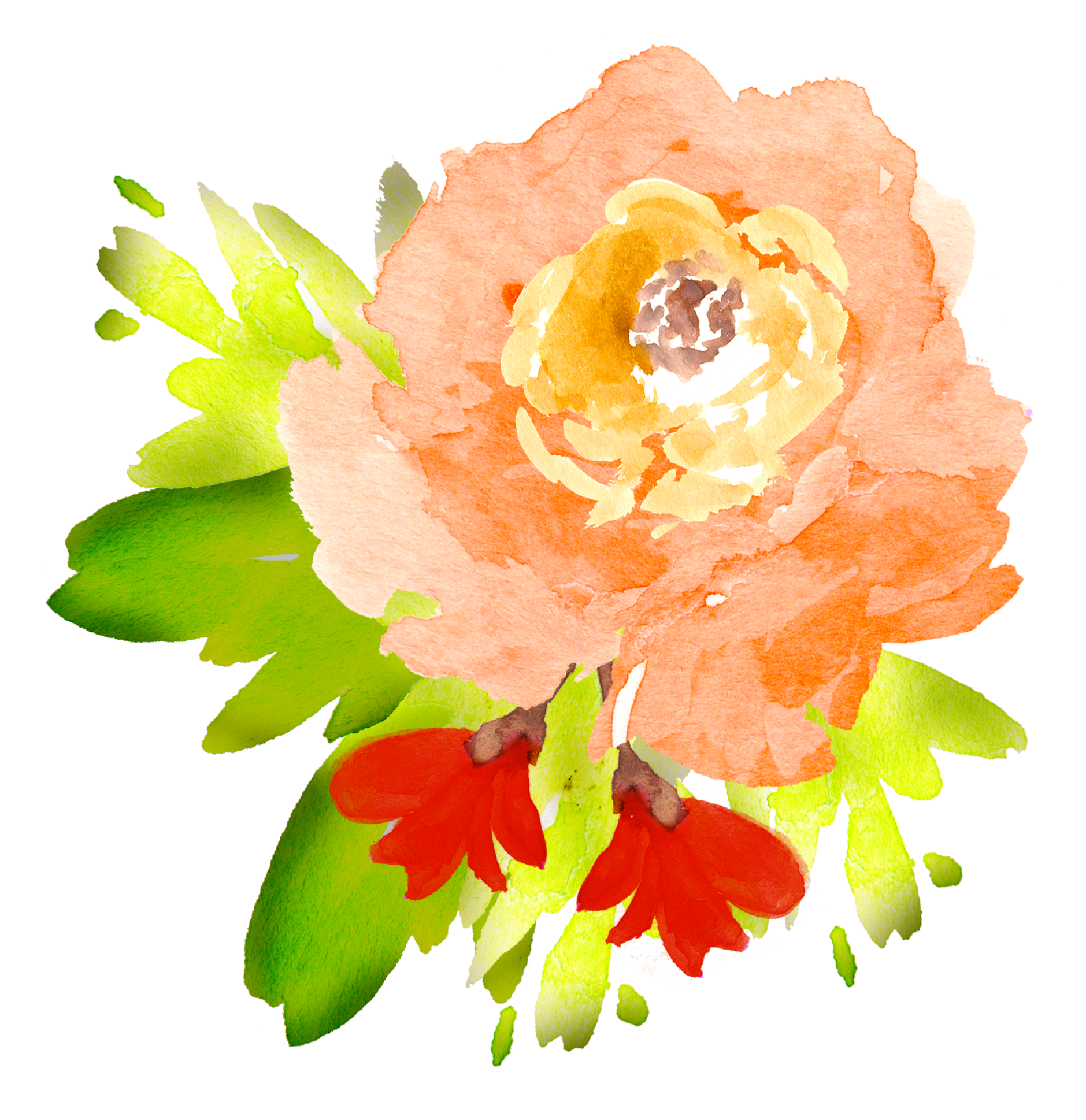 Clipart rose watercolor. Free floral elements pretty