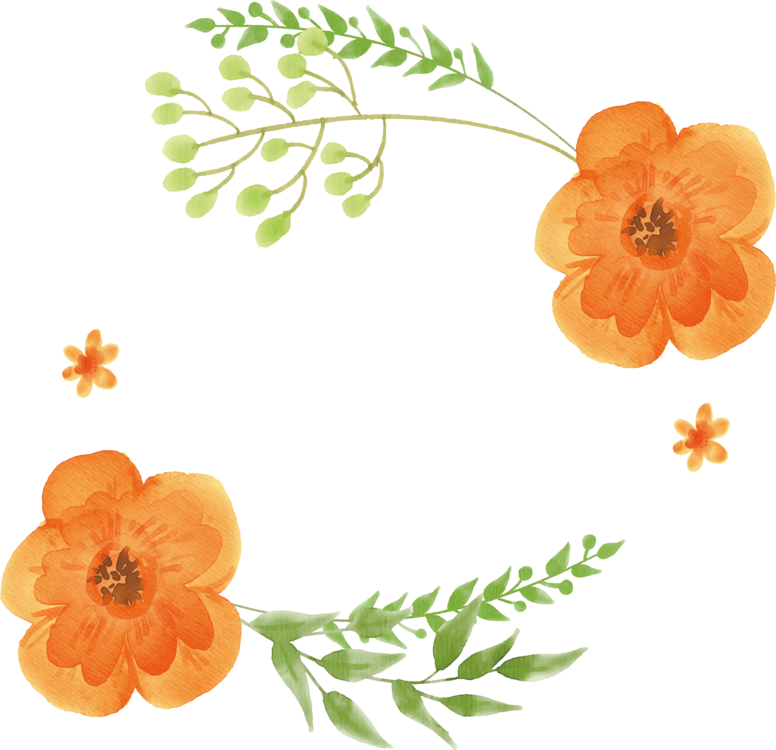 Flowers orange painting flower. Plants clipart watercolor