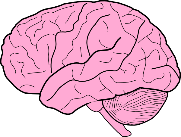Cartoon . Clipart brain
