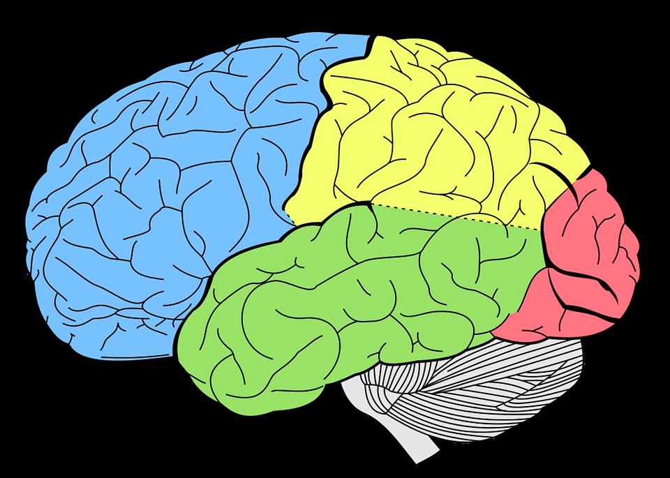 Psychology clipart hippocampus brain. Aprende a prevenir un