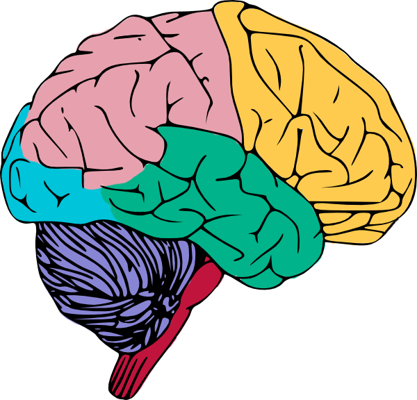 Kids clipart brain. Real letters format pertaining