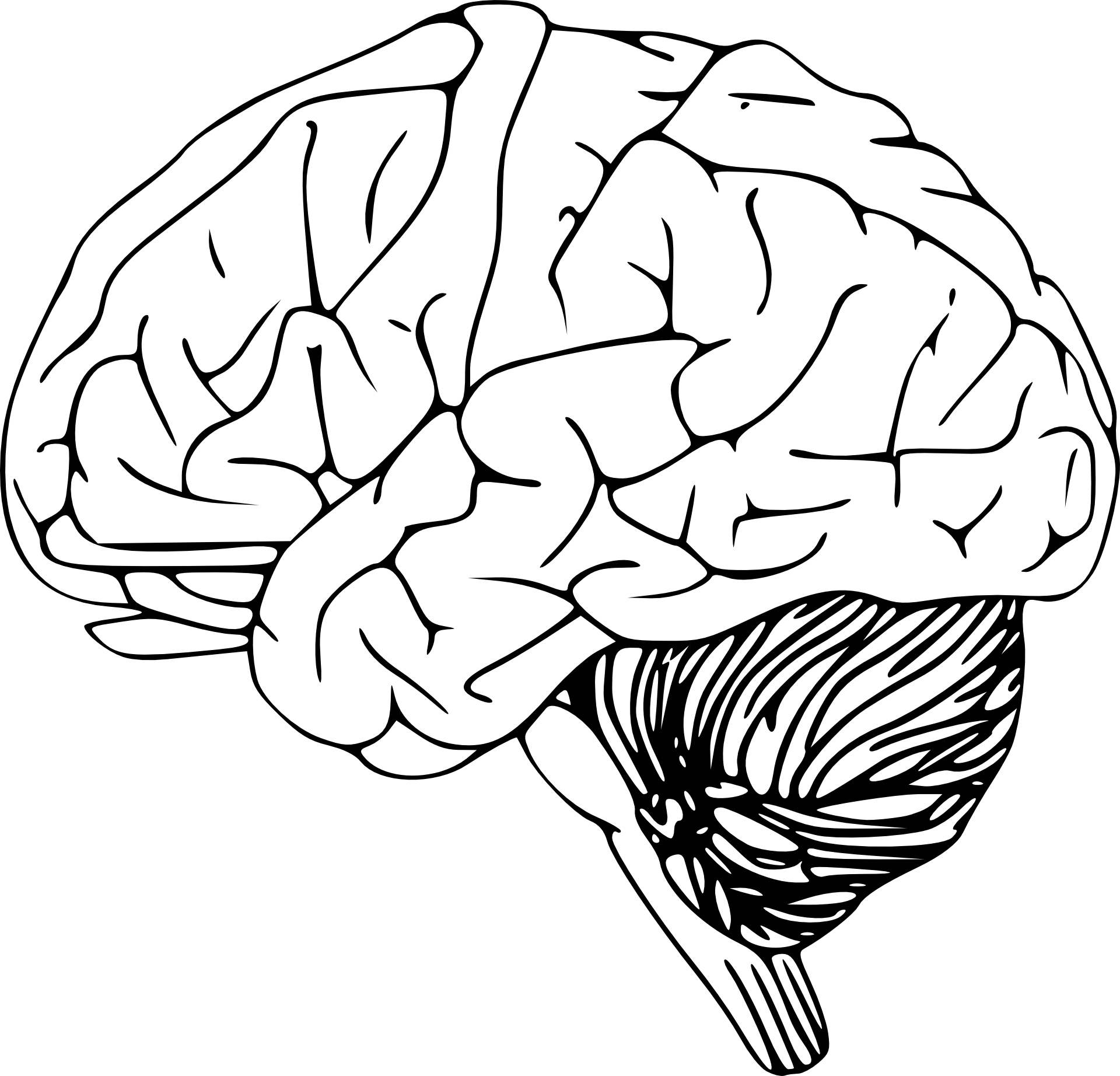 Outline of the human. Thoughts clipart brain