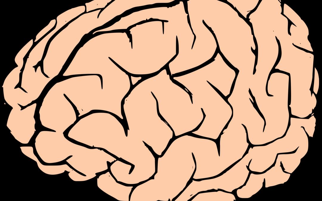 Clipart brain brain development. A holey how th